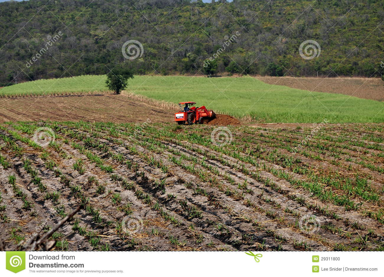 Saraburi,泰国: 犁域的农夫