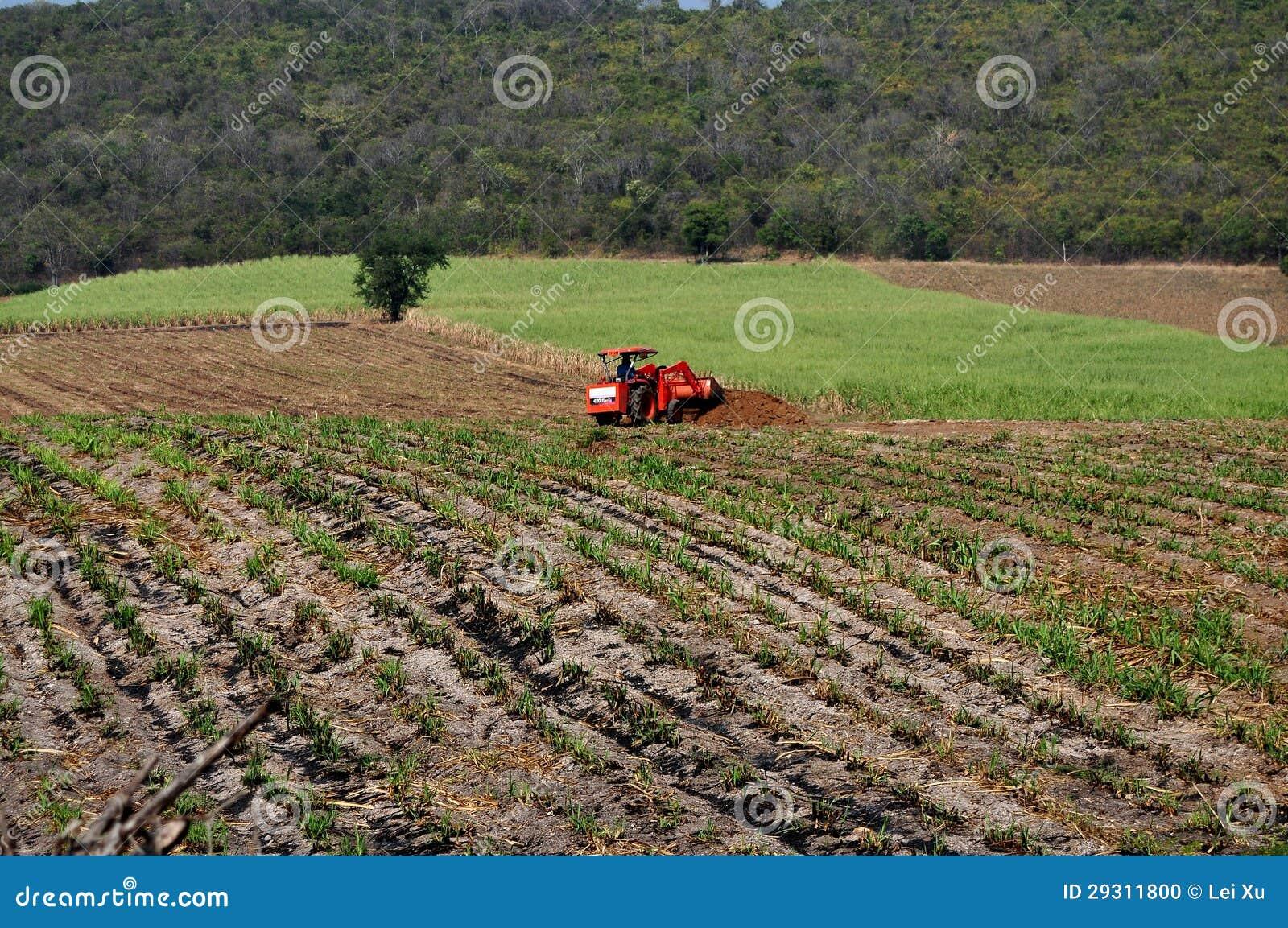 Saraburi, Thailand: Landwirt, der Felder pflügt