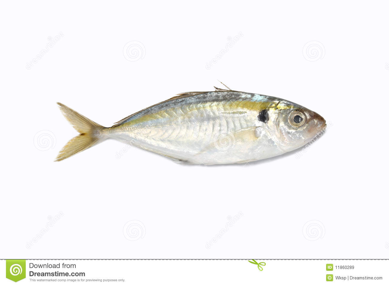 Sardine fish royalty free stock images image 11860289 for Is a fish wet