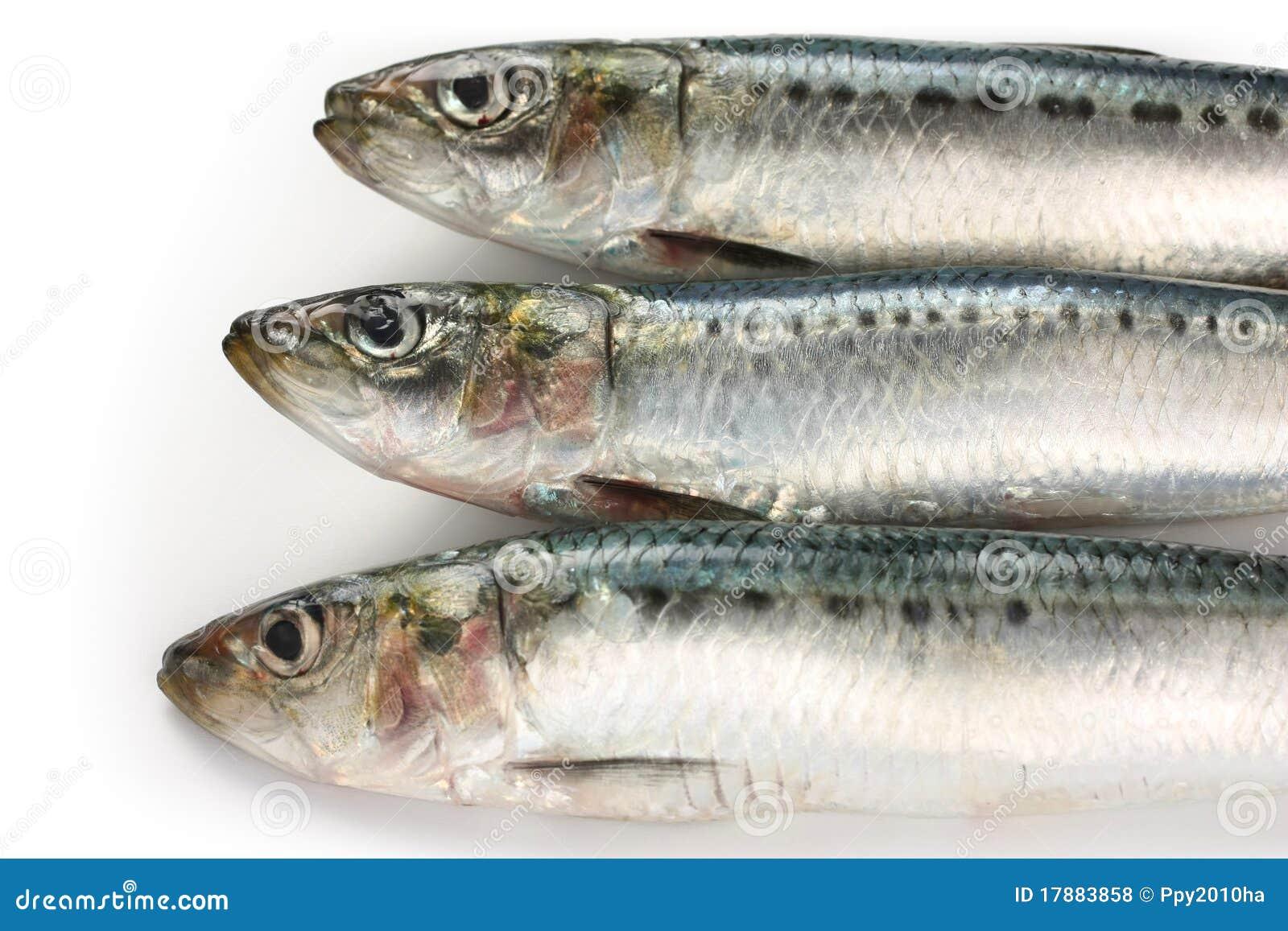 Sardine japonaise pilchard japonais photo stock image for Poisson japonais nourriture