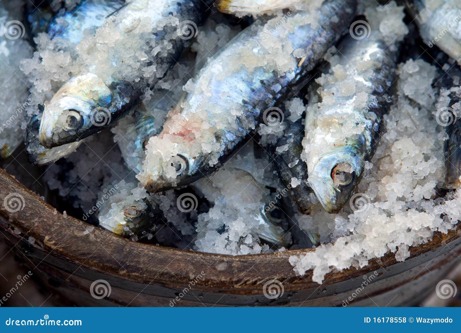 sardinen konserviert im salz stockfoto bild 16178558. Black Bedroom Furniture Sets. Home Design Ideas