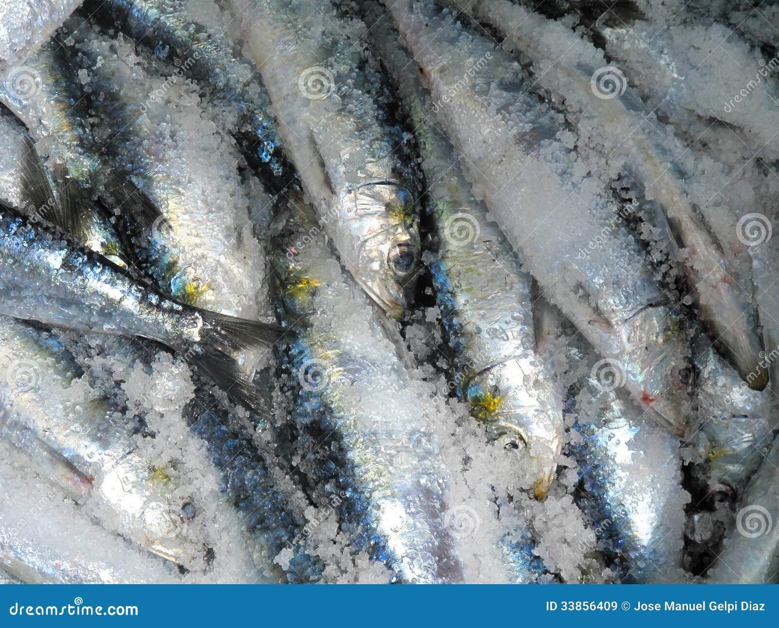 Sardines en sel