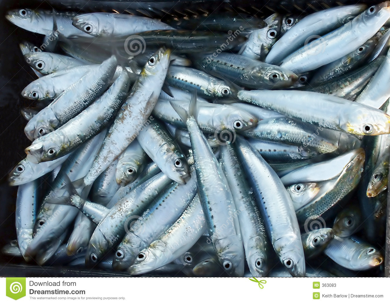 Sardines of pelsers
