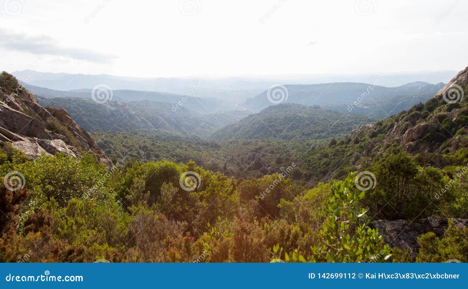 Sardinian landskap för bergsommarsolnedgång Skog på backen under himmel med moln