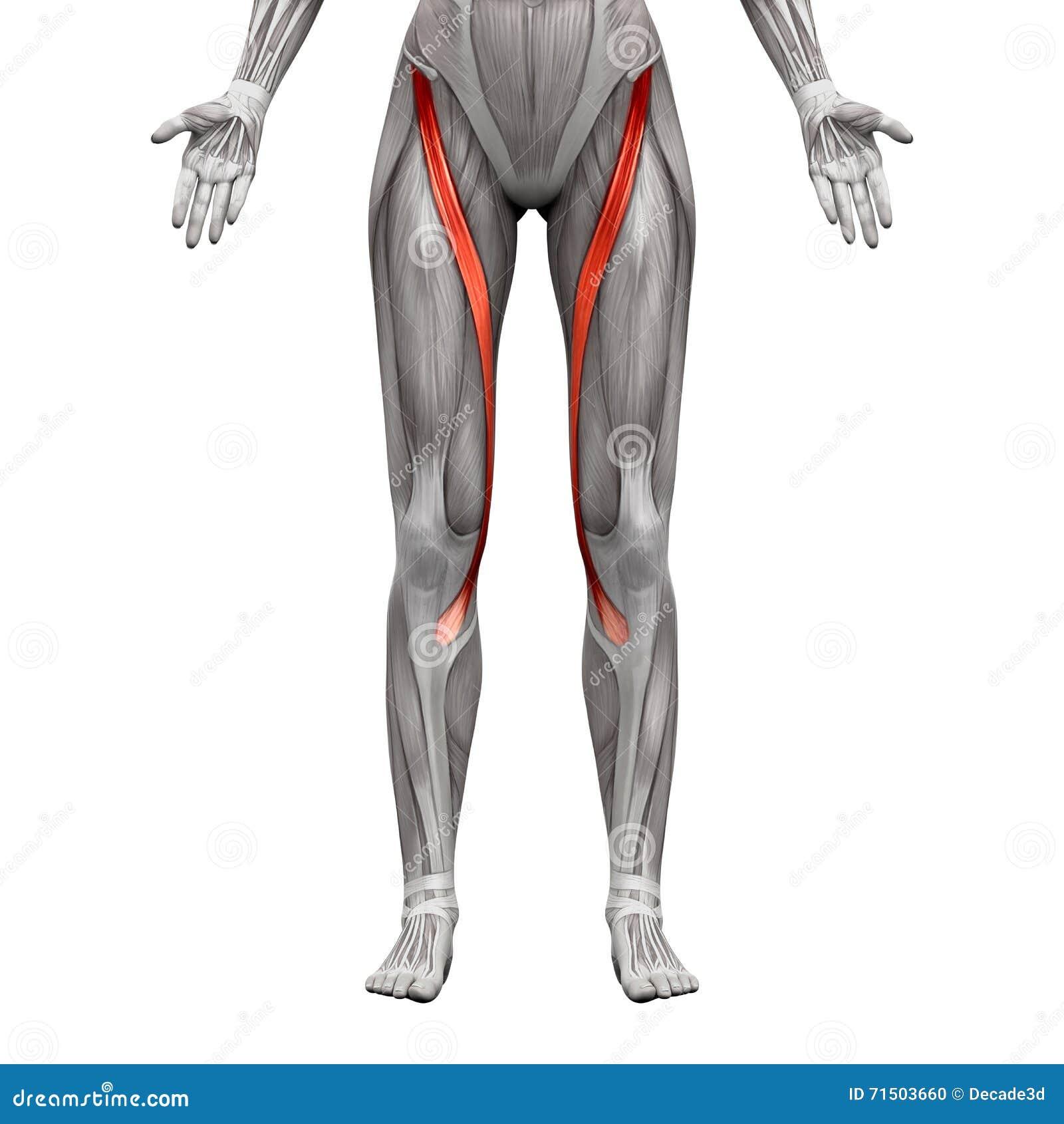 Beste Muskeln Hals Ideen - Anatomie Ideen - finotti.info