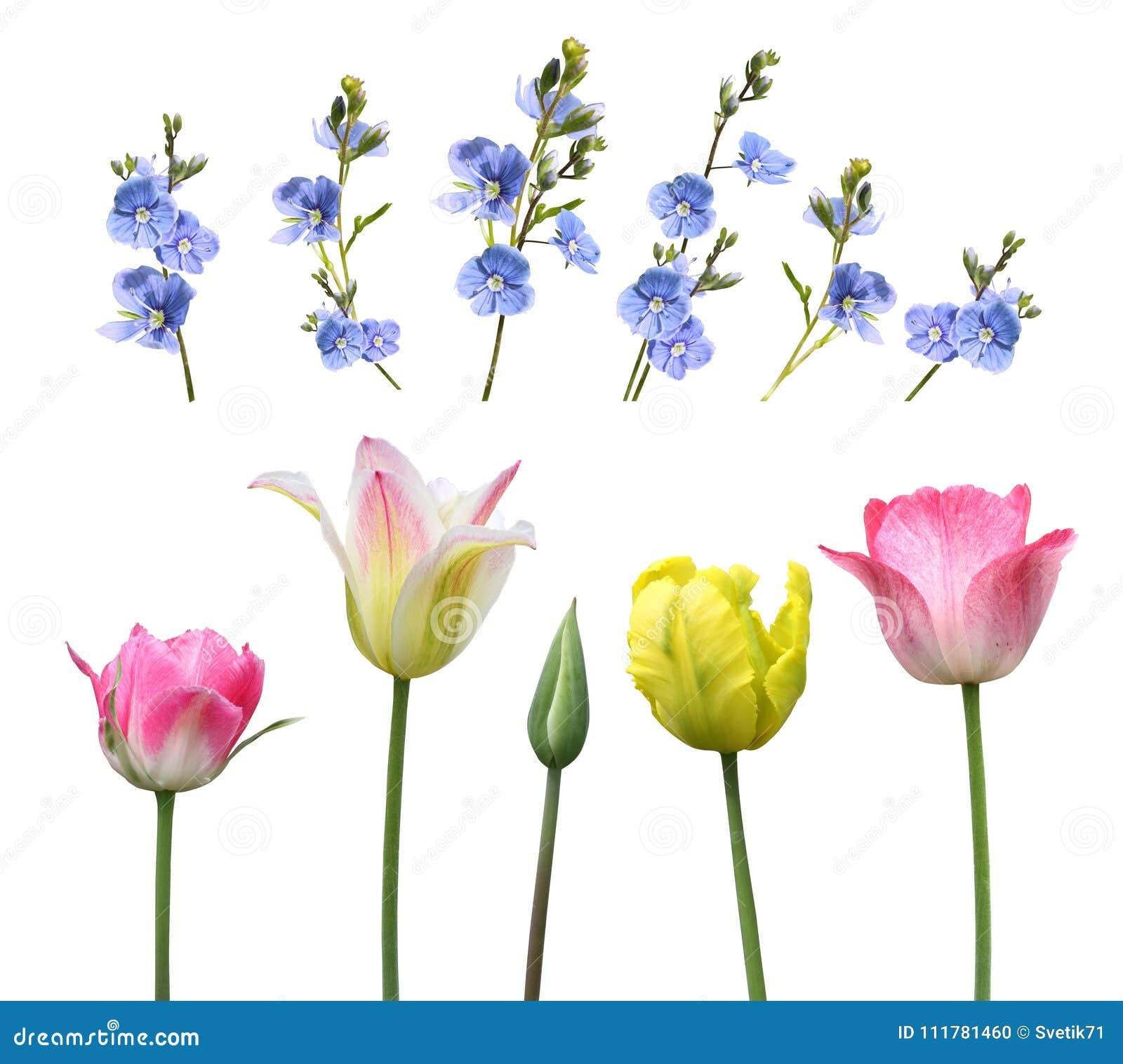 Satz Blumen auf einem weißen Hintergrund