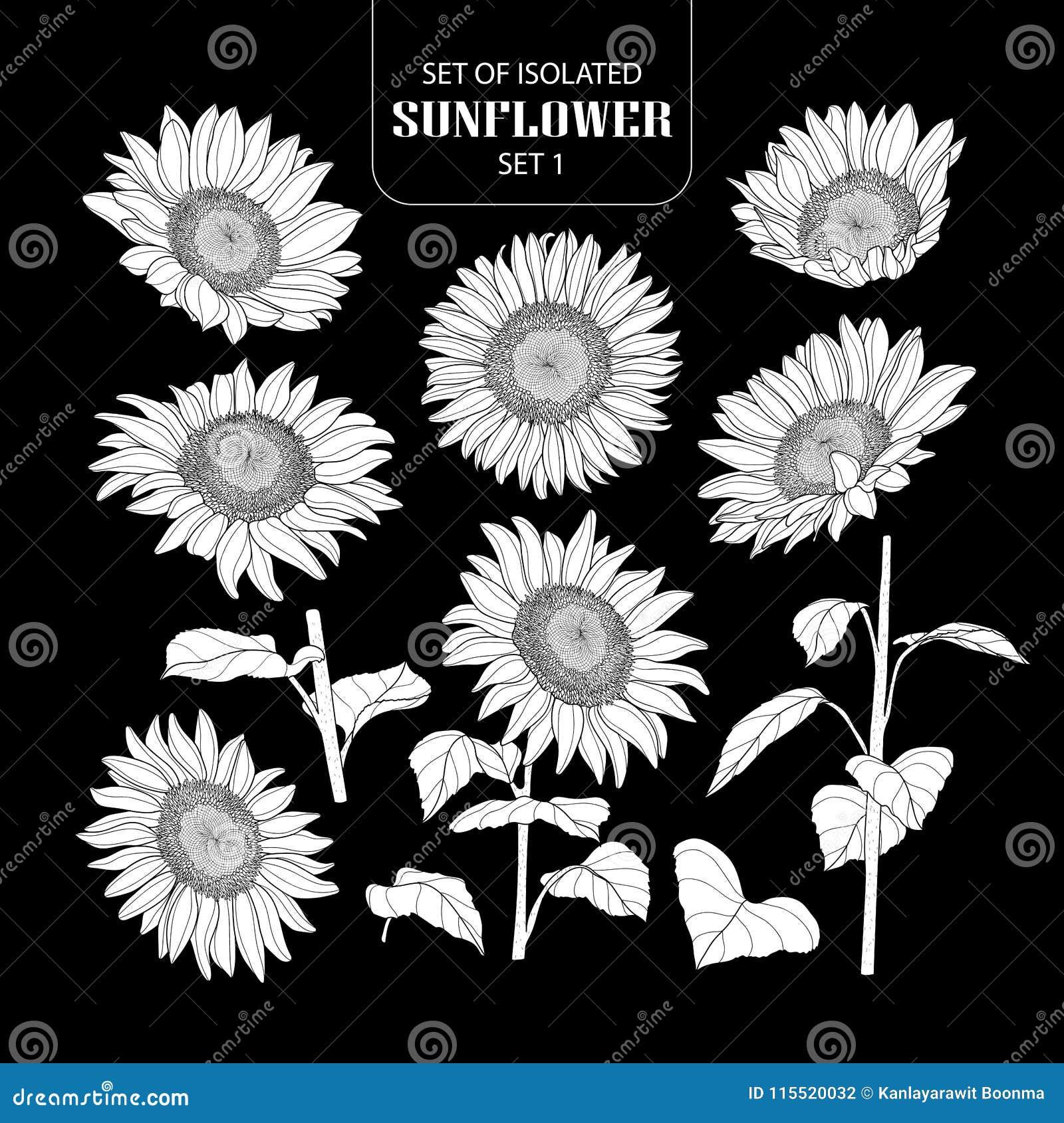 Satz der lokalisierten weißen Schattenbildsonnenblume stellte 1 ein