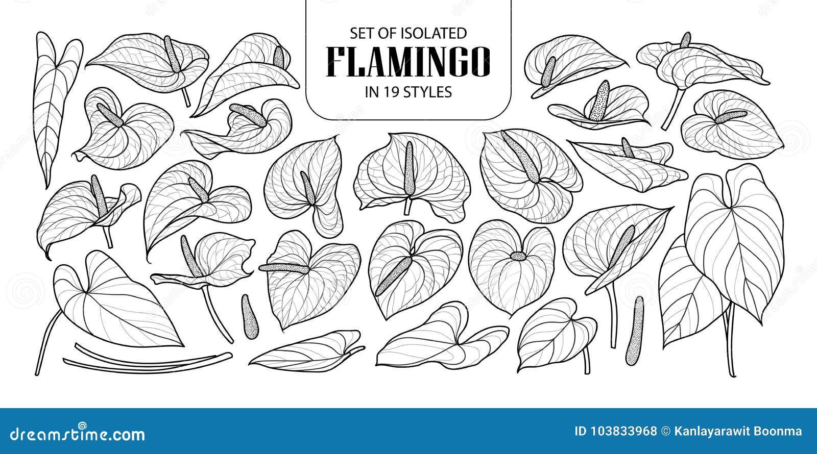 Satz des lokalisierten Flamingos in 19 Arten Nette Hand gezeichnete Blumenvektorillustration in der schwarzen Entwurfs- und weiße