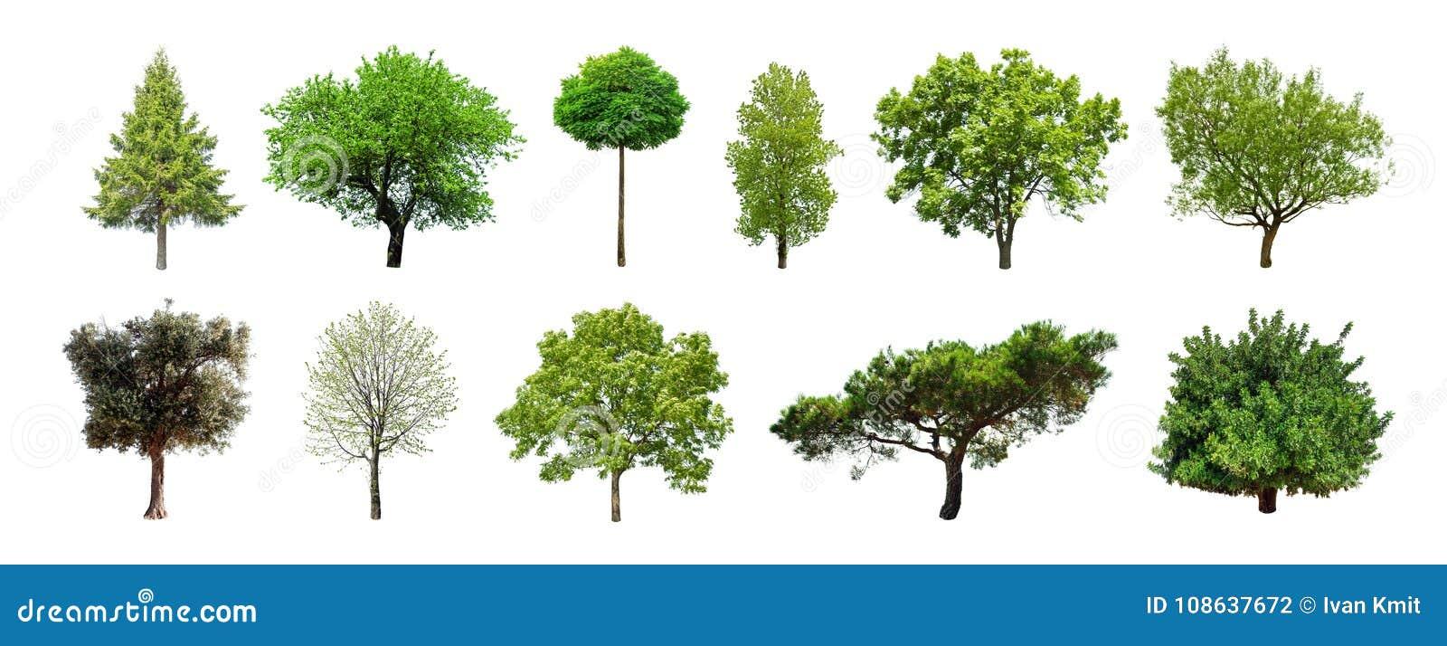 Satz grüne Bäume lokalisiert auf weißem Hintergrund