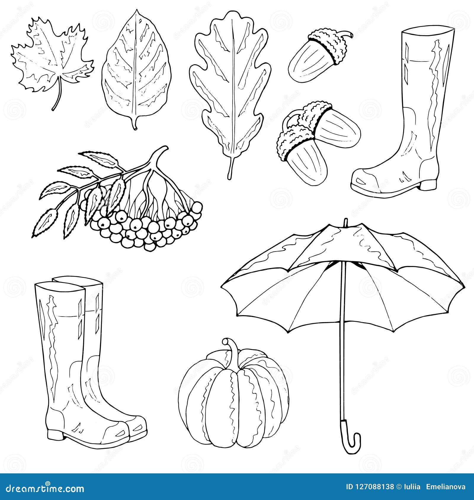 eichenblatt stock illustrationen vektors  klipart