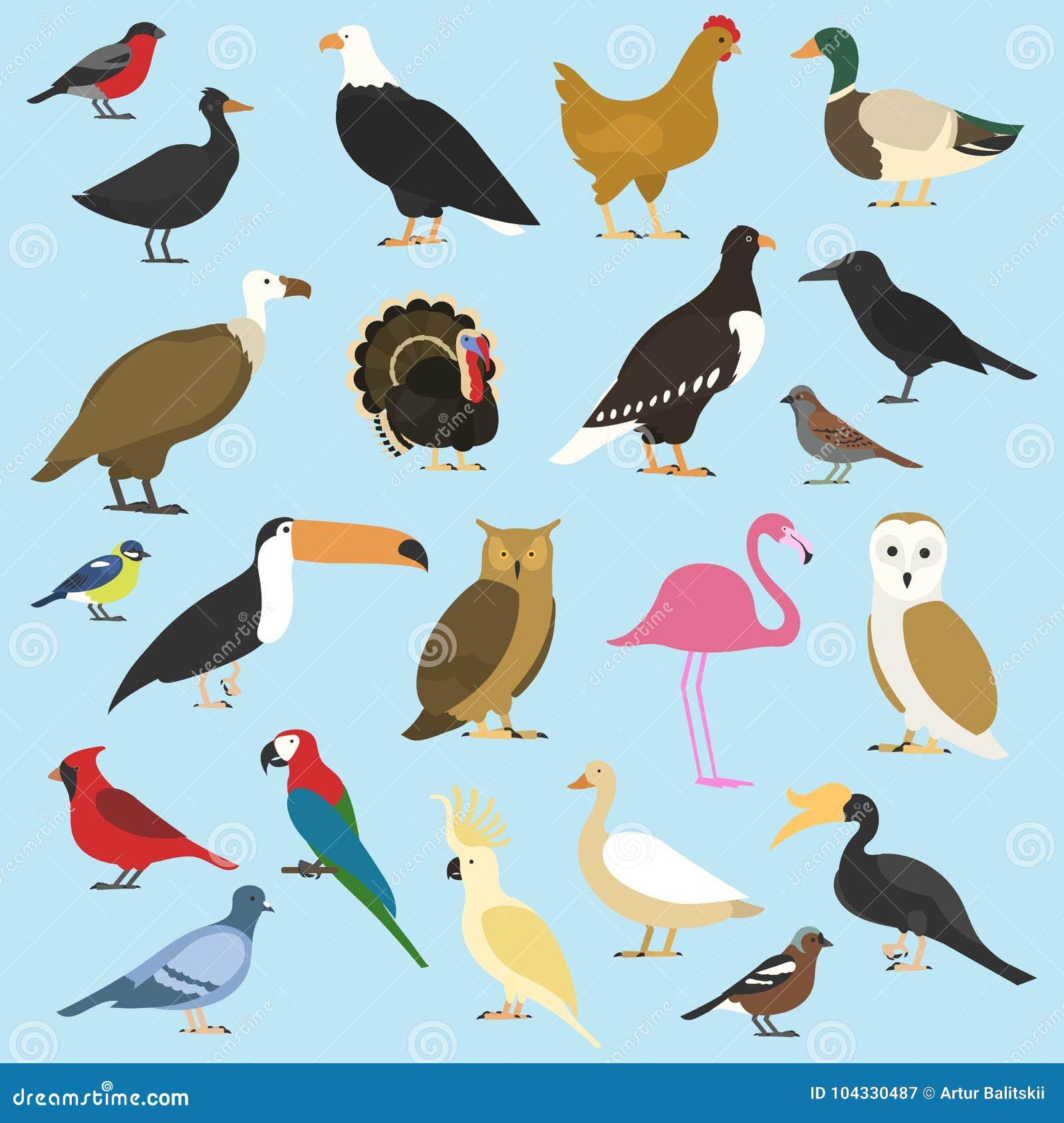 Satz inländische Vögel und tropische Tiere Gänsegeier, Kakadupapagei Nashorn Hornbill, Riesentukan