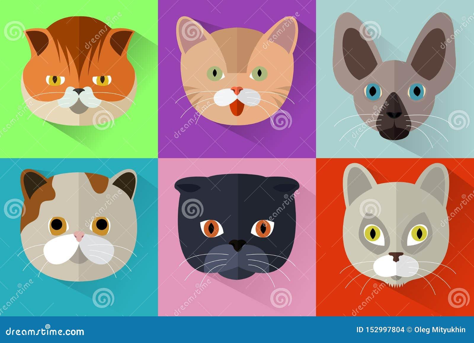 Satz Katzenk?pfe in der flachen Art Nettes Katzenvektormuster Bärte und Ohren Tierportr?t-Satz mit flachem Design