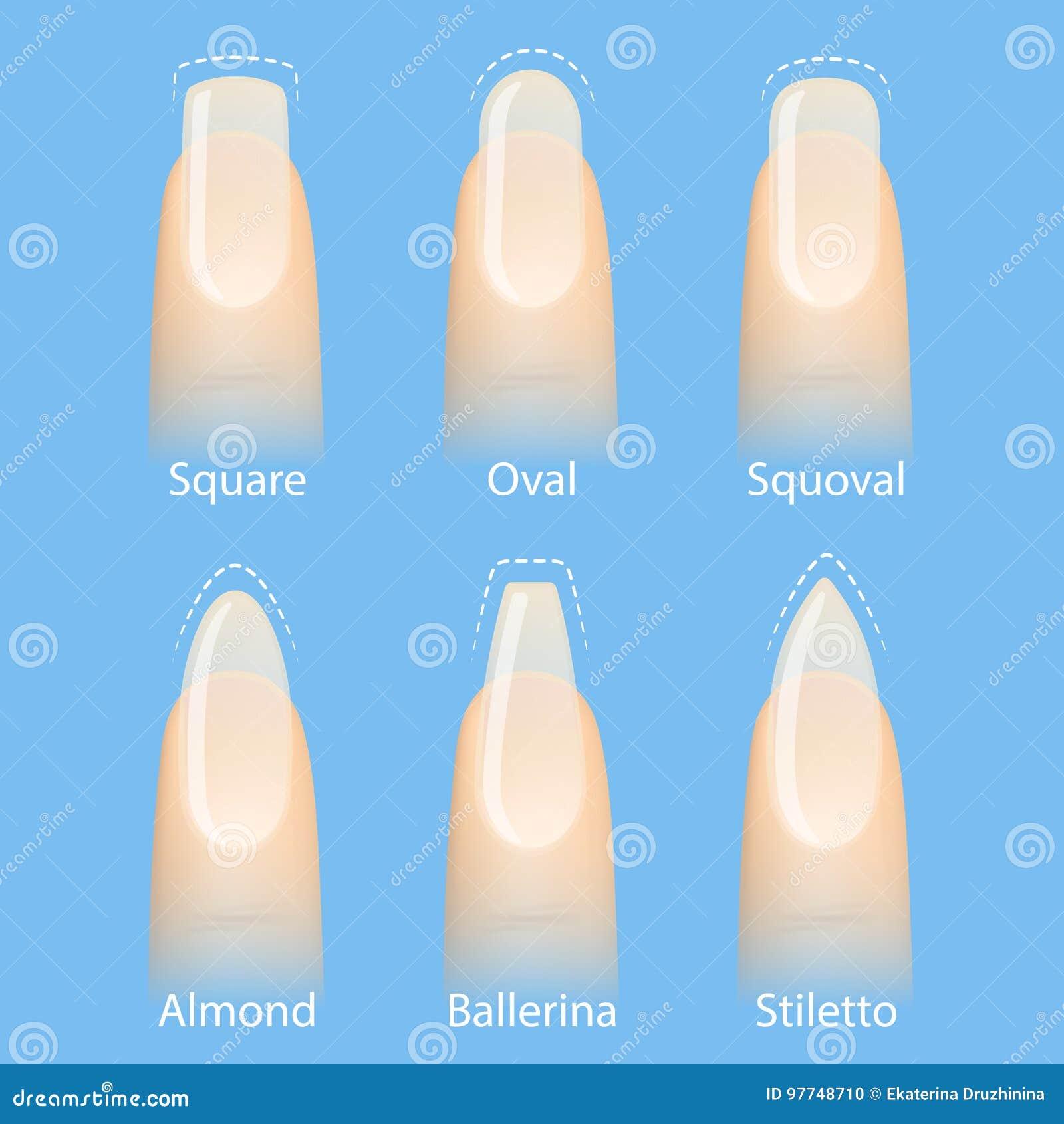 satz nagelformen vektor abbildung. illustration von schönheit - 97748710