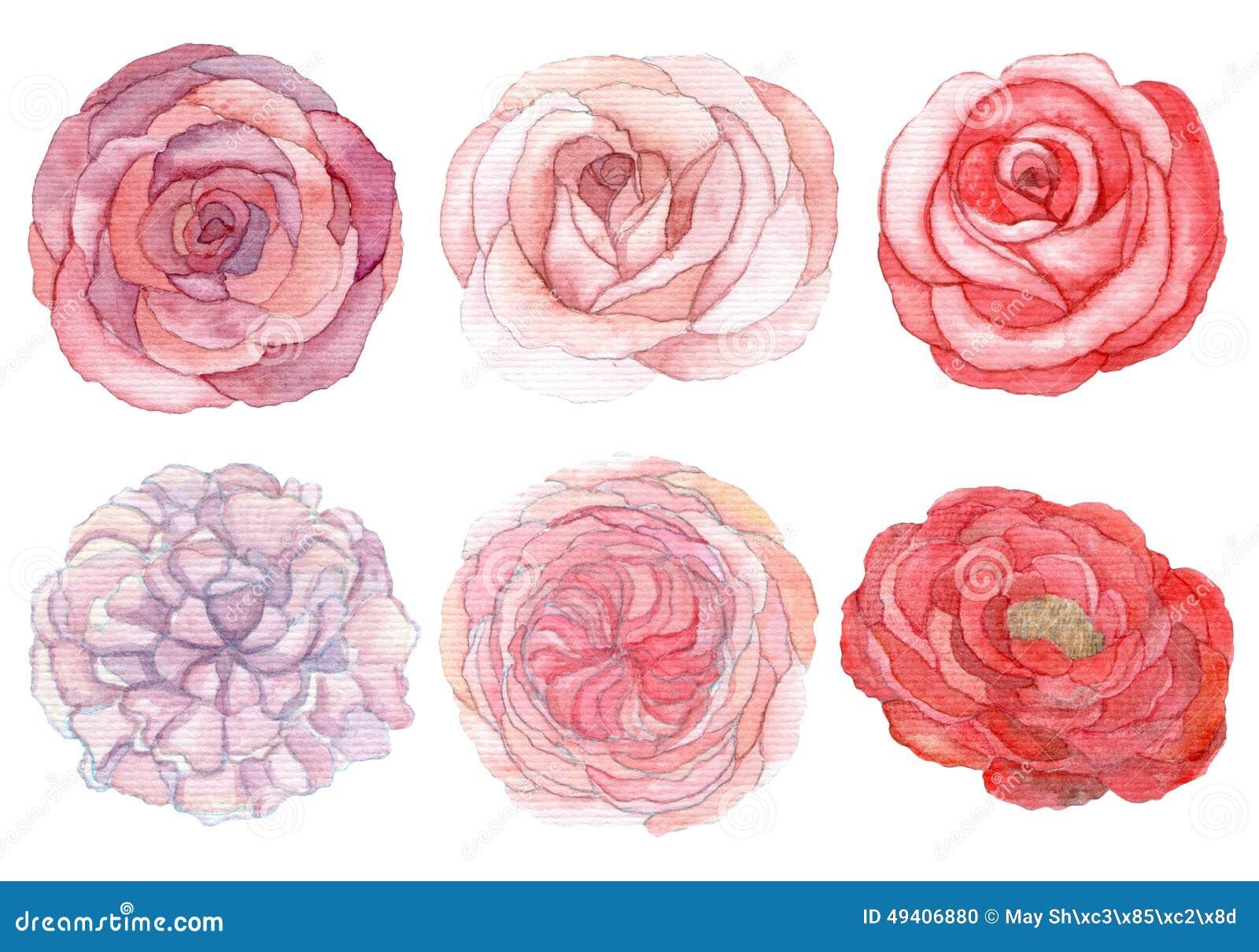 Download Satz Rosen Und Pfingstrosen Stock Abbildung - Illustration von wasser, farbe: 49406880