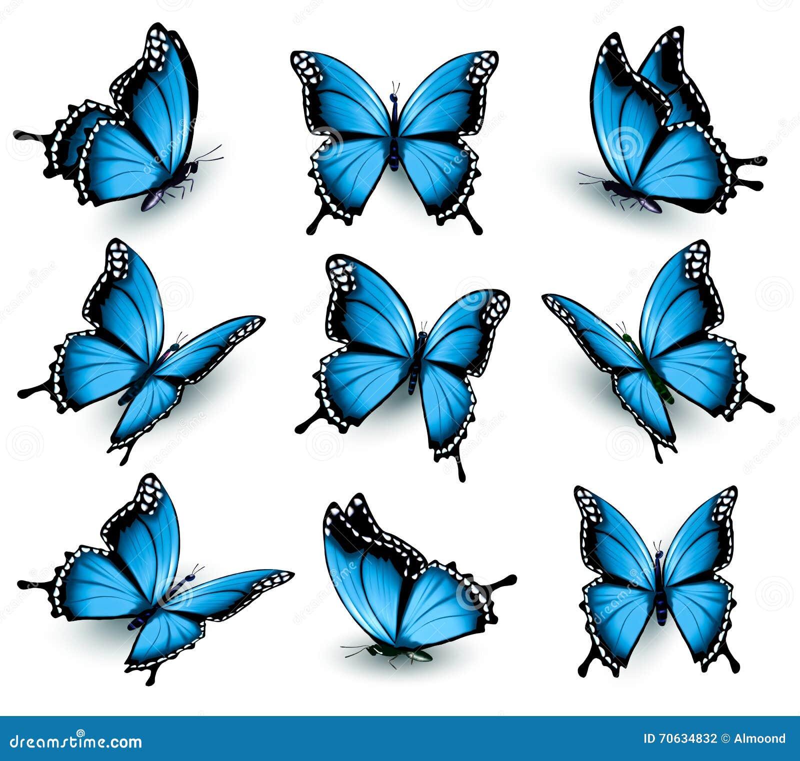 satz sch ne blaue schmetterlinge vektor abbildung bild. Black Bedroom Furniture Sets. Home Design Ideas