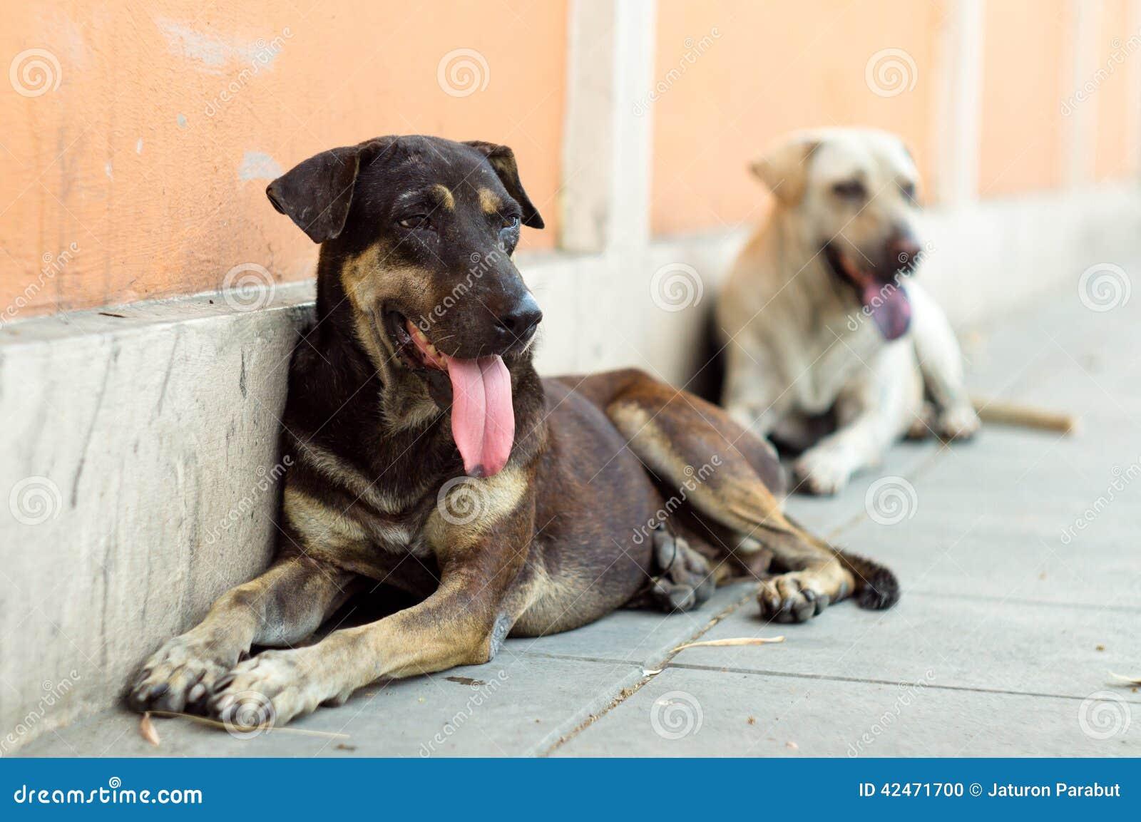 Satz Streuhunde