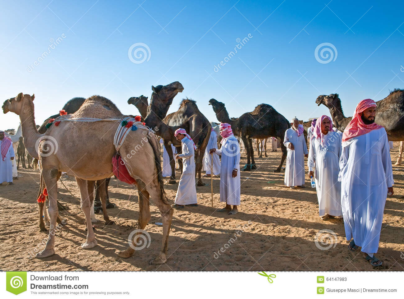 Saudi Arabia editorial stock photo  Image of camel