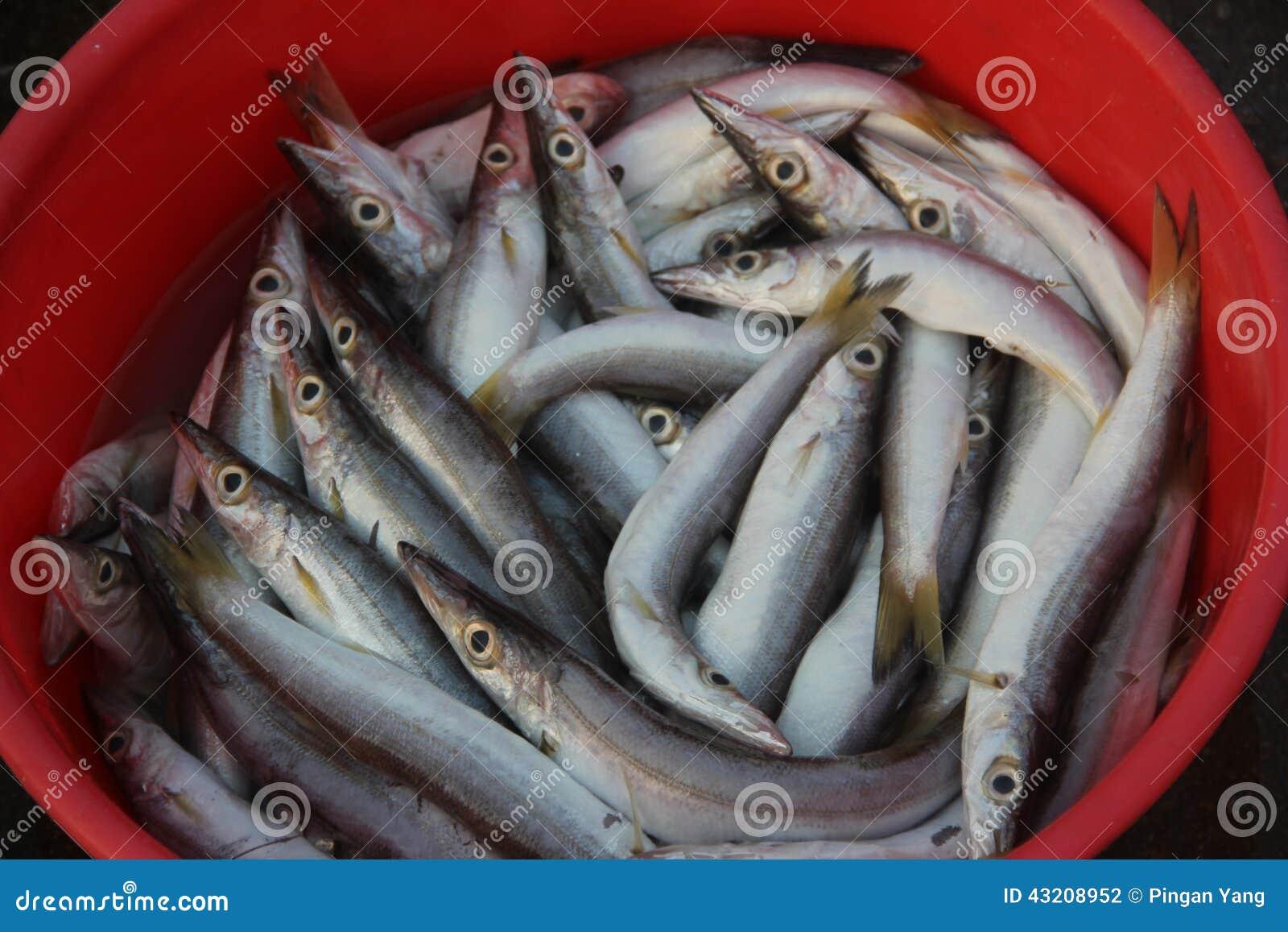 Download Saury arkivfoto. Bild av rikt, fisk, fiskeri, angus, fett - 43208952