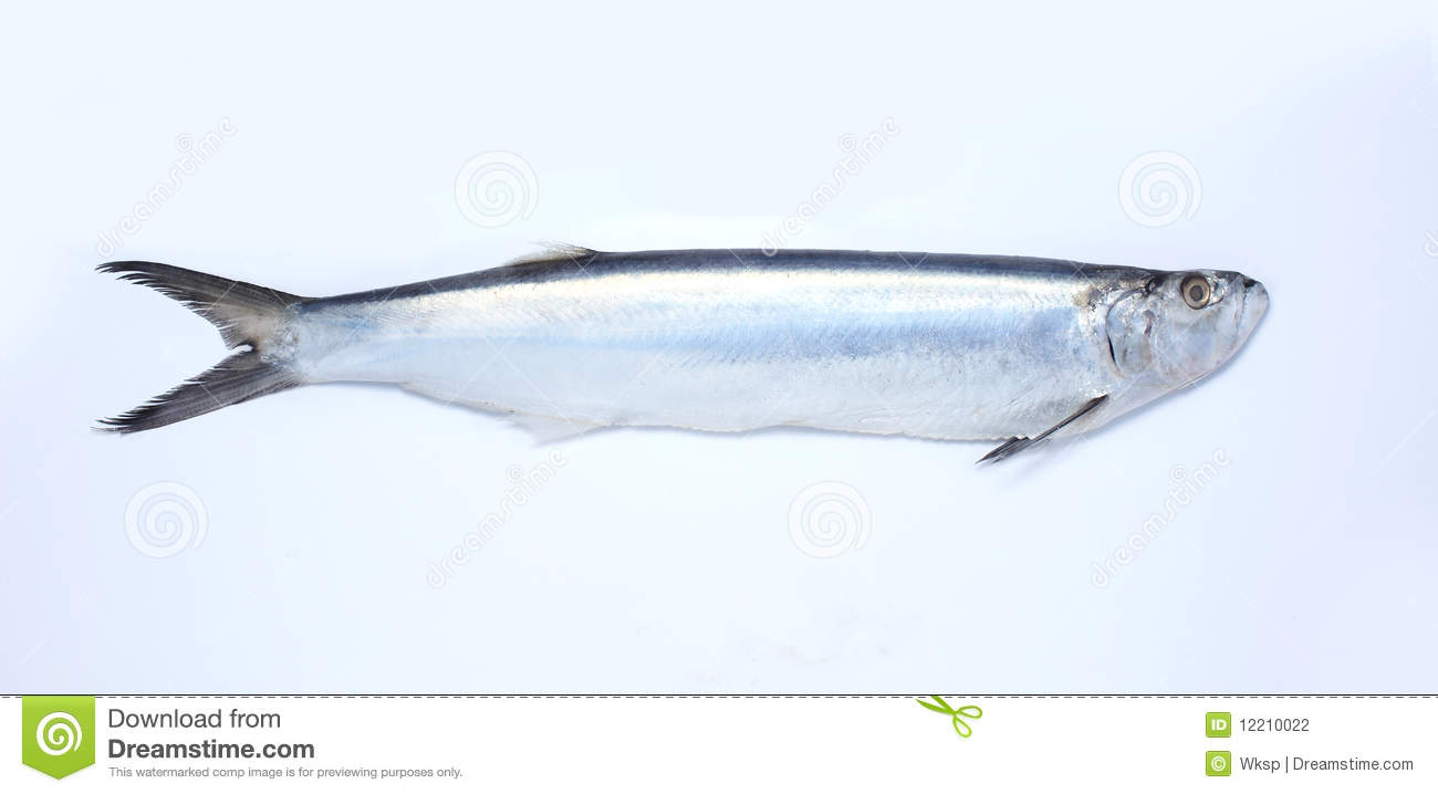 Saury fish stock photography image 12210022 for Is a fish wet
