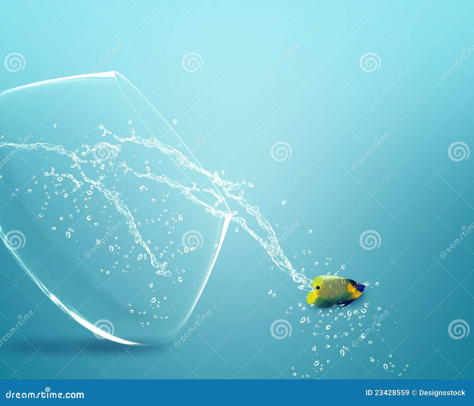 Sauter d Angelfish du fishbowl