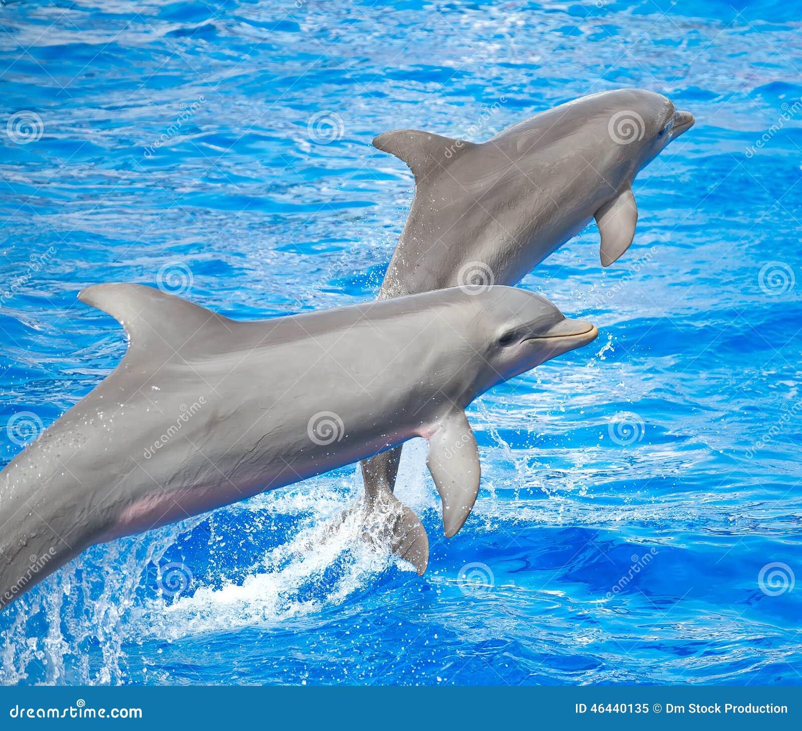 Sauter de deux dauphins
