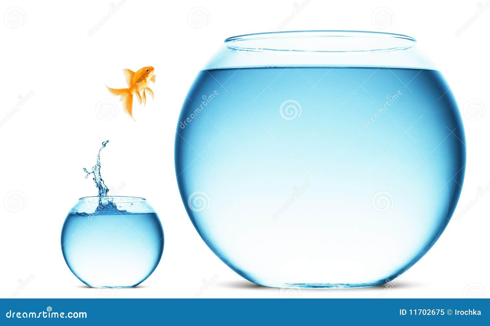 Sauter de Goldfish de l eau