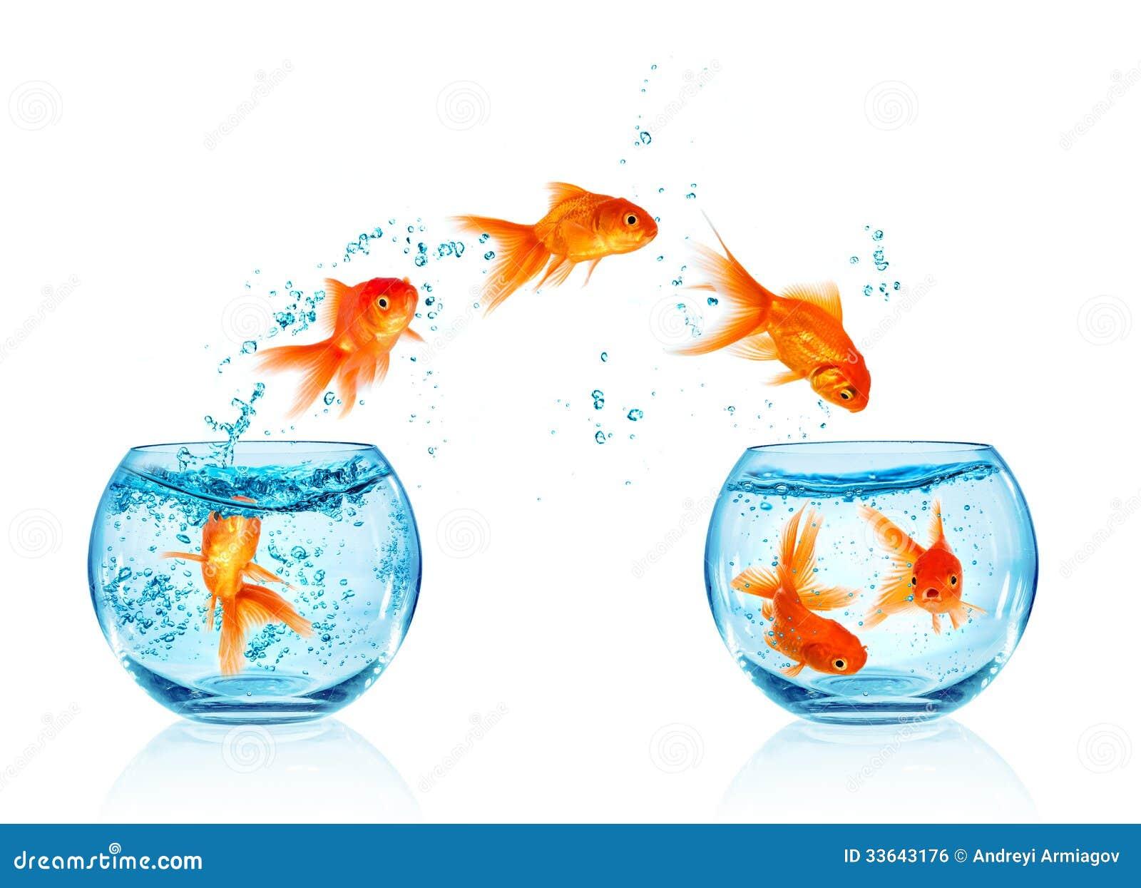 Sauter de poisson rouge image libre de droits image for Recherche poisson rouge