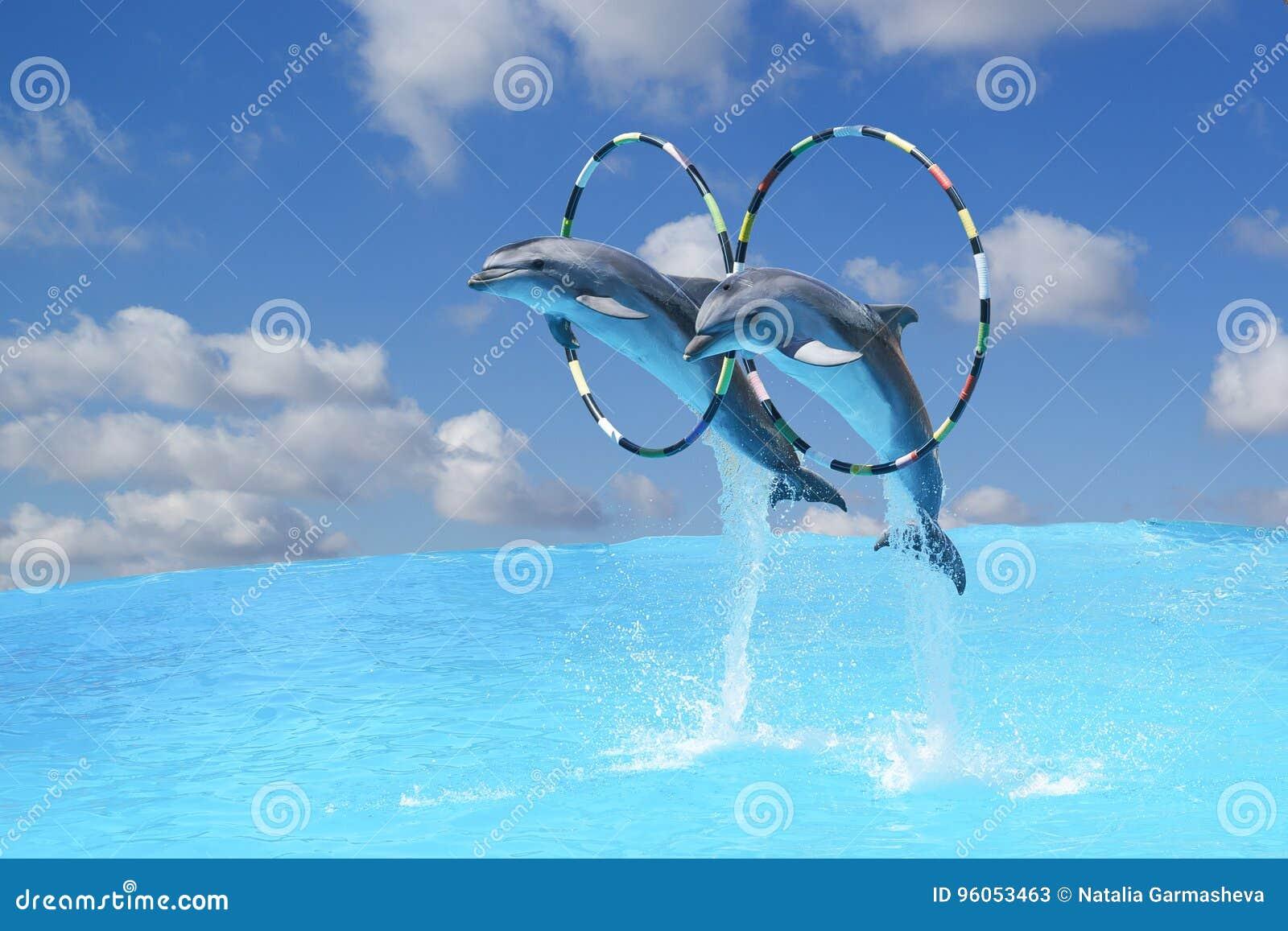 Sautez les deux grands dauphins de bottlenose et x28 ; lat Truncatus& x29 de Tursiops ; par le cercle au-dessus de l eau sur le b