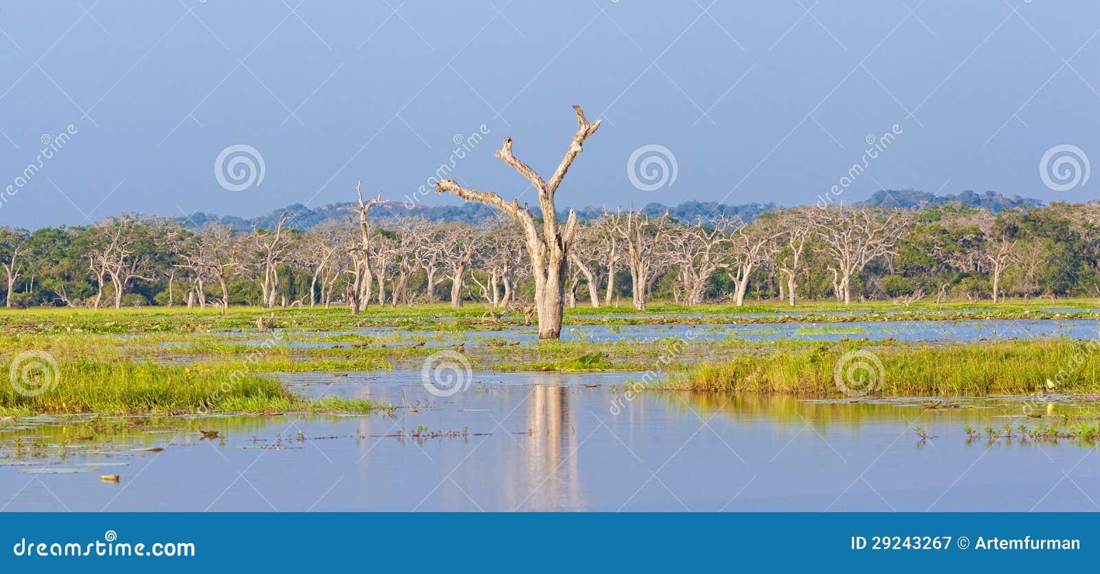 Download Savana imagem de stock. Imagem de filiais, ângulo, savanna - 29243267