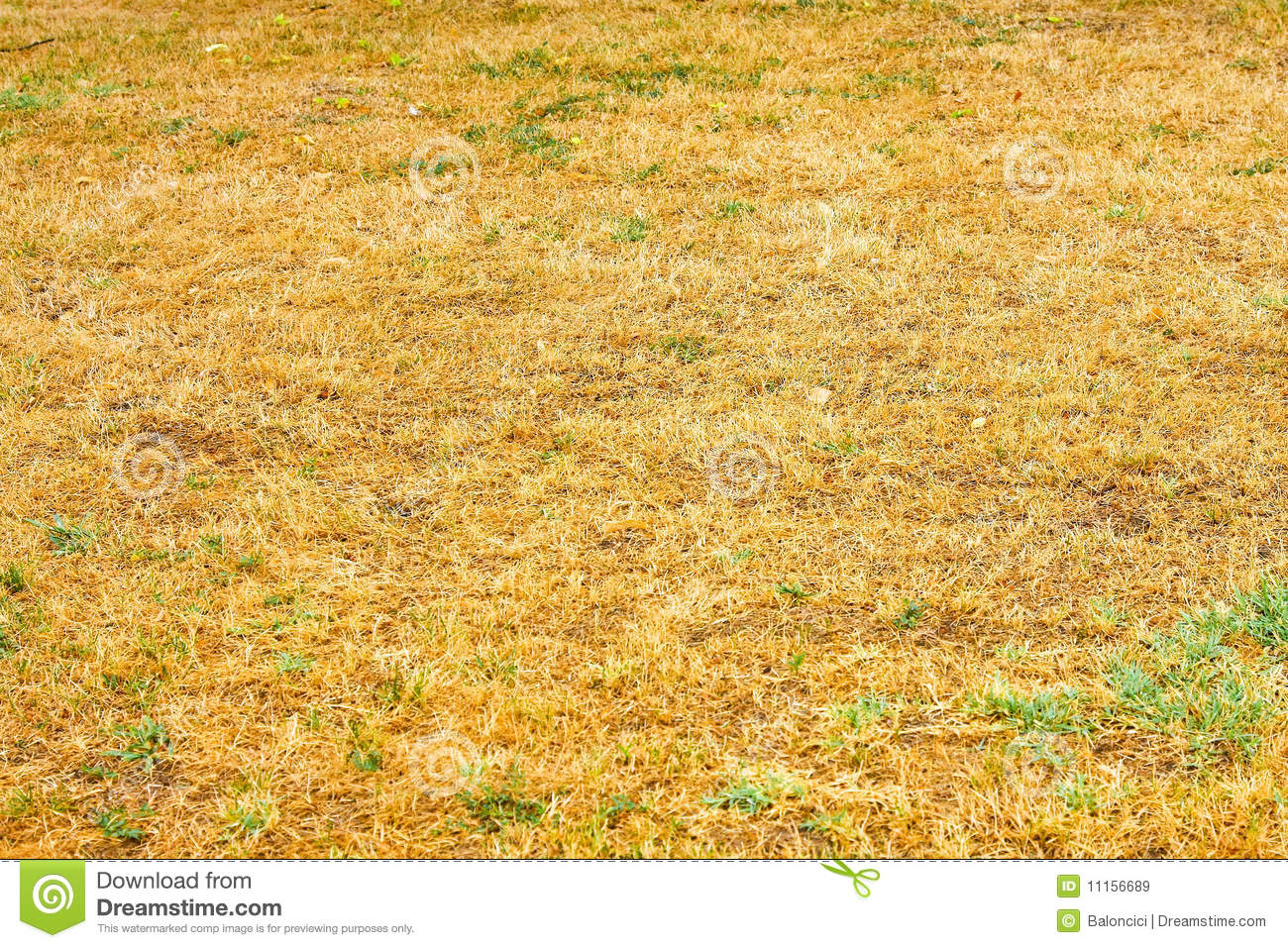 Savanna Drought Royalty Free Stock Images - Image: 11156689