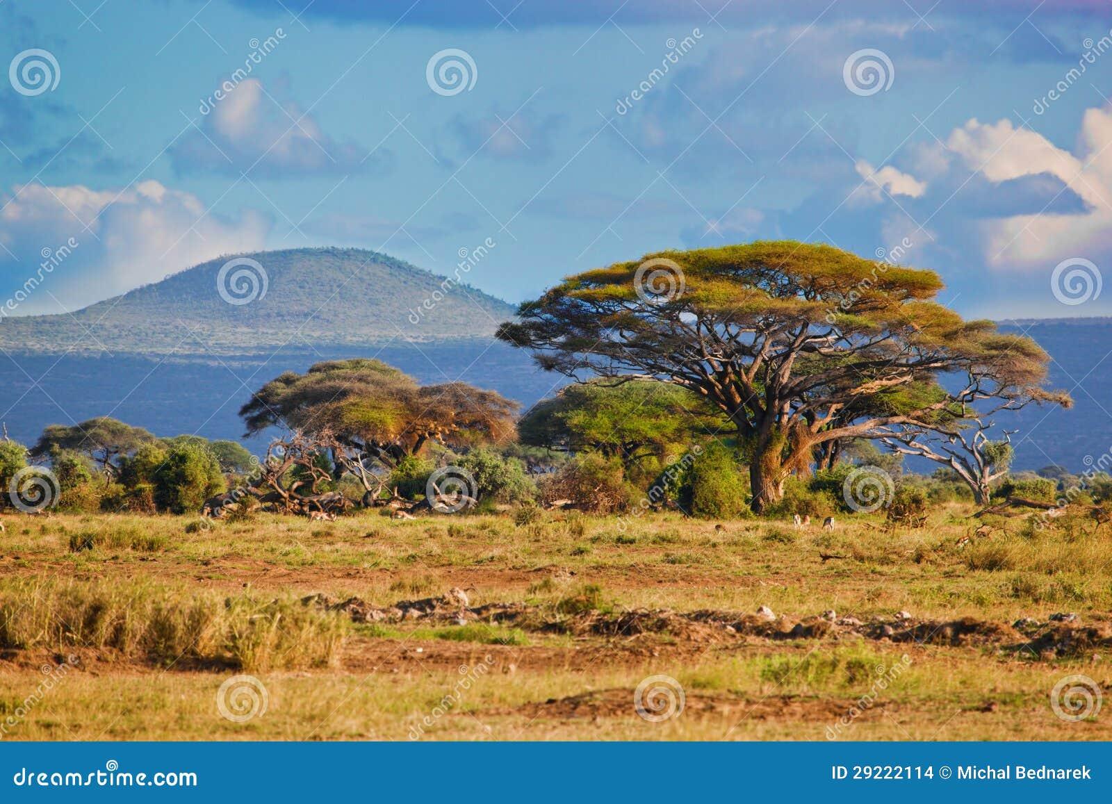 Savanna landscape in Africa, Amboseli, Kenya