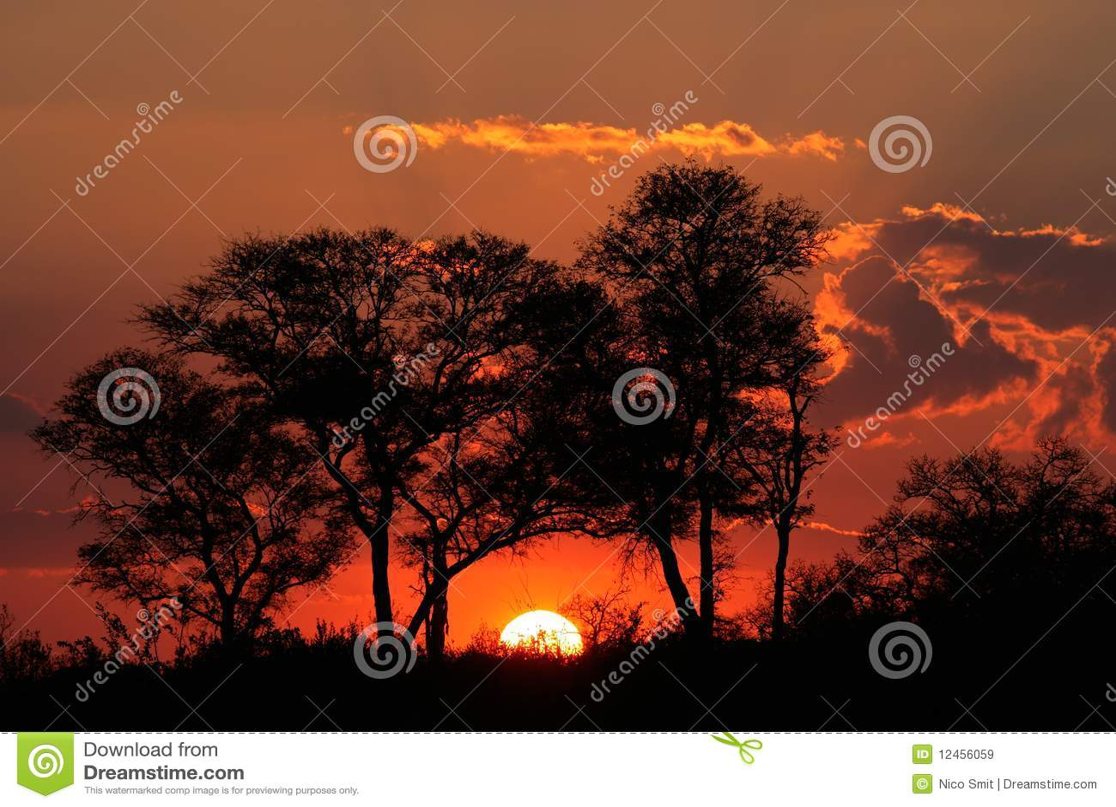 Savanna sunset, South Africa