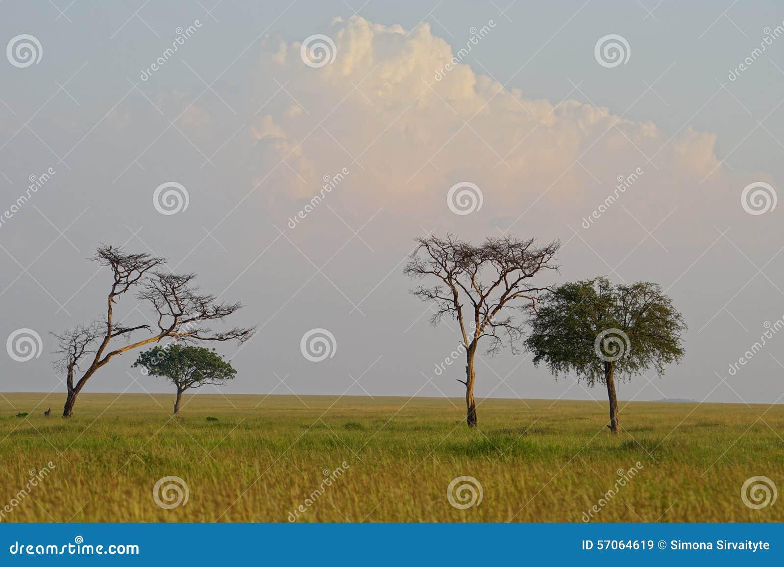 Savanne in Serengeti, Tanzania