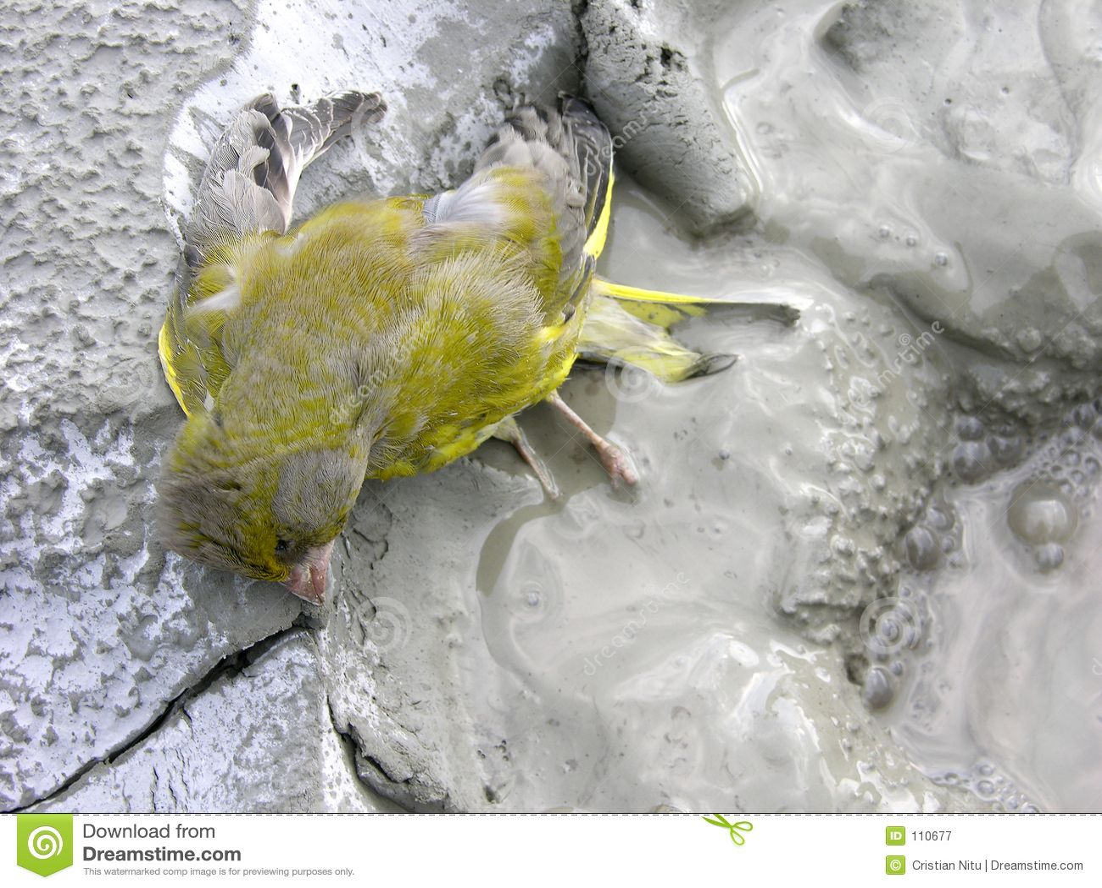 Download Save Birds ! stock image. Image of danger, closeup, bird - 110677