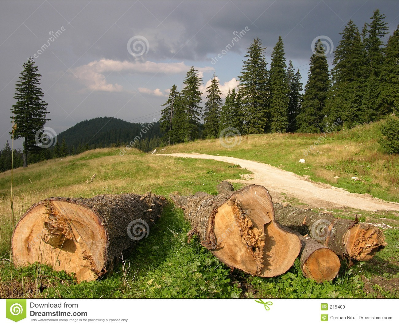 save forest European commission - joint research centre - forest resources and climate  unit.