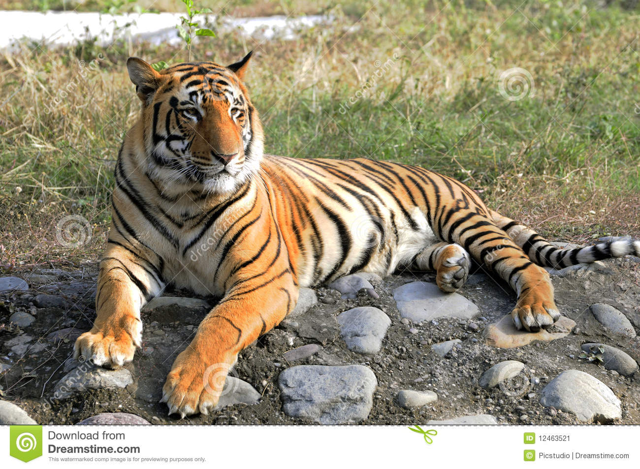 Here is your essay on project tiger