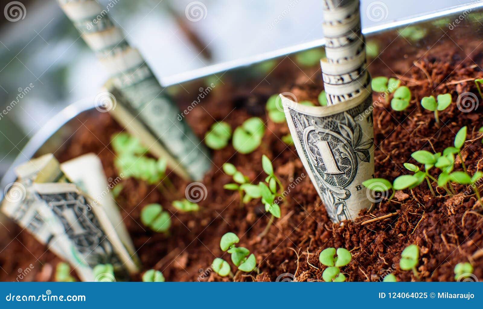 Money Growing Dollar Bills Sprouting Stock Image - Image of poster ...