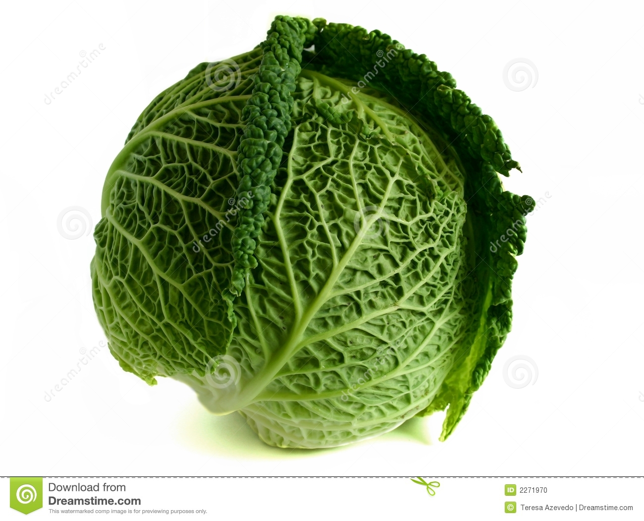 Savoy cabbage isolated over white background.