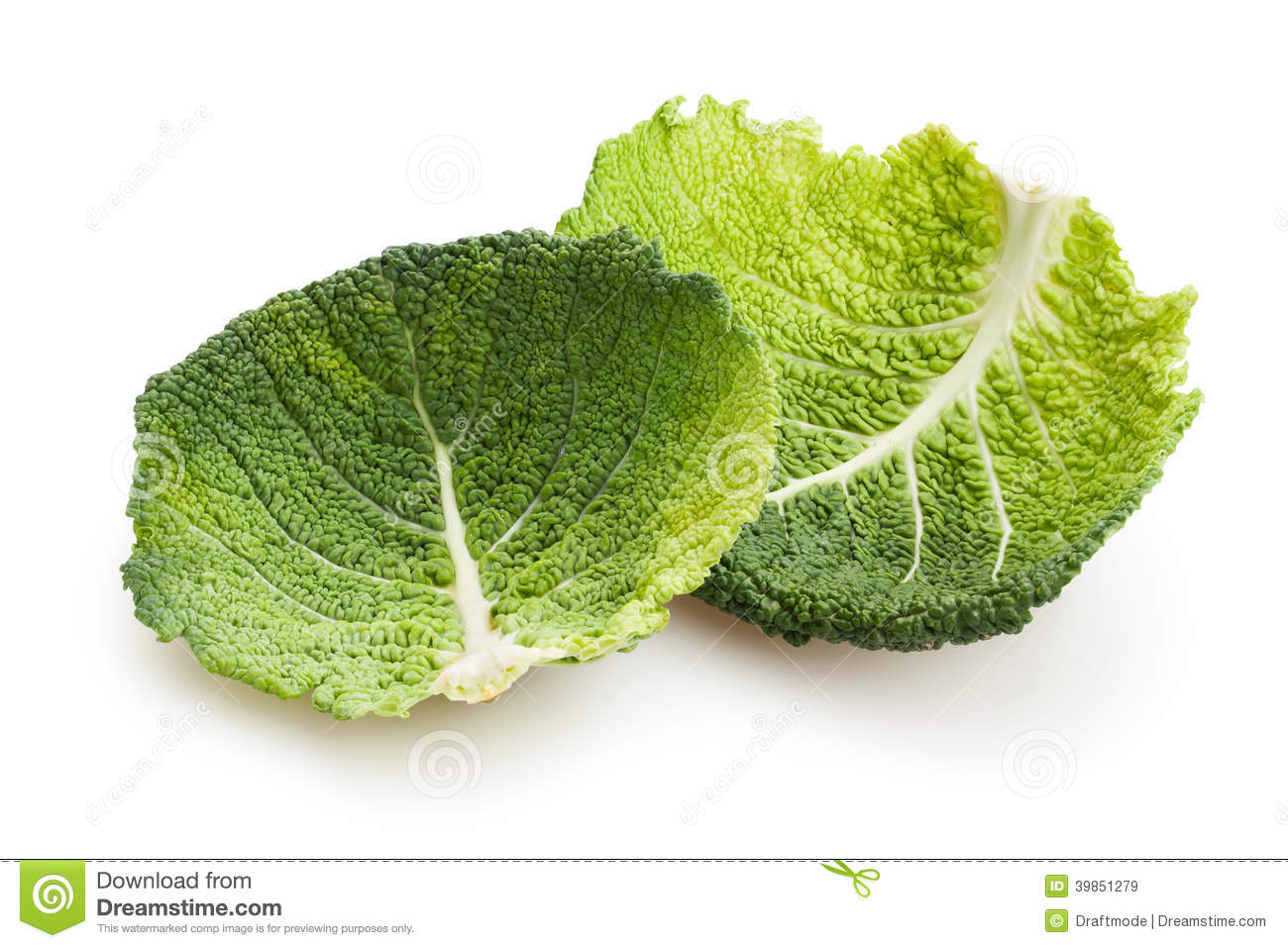 Savoy Cabbage Leaves Stock Image Image Of Textured Vegetation 39851279