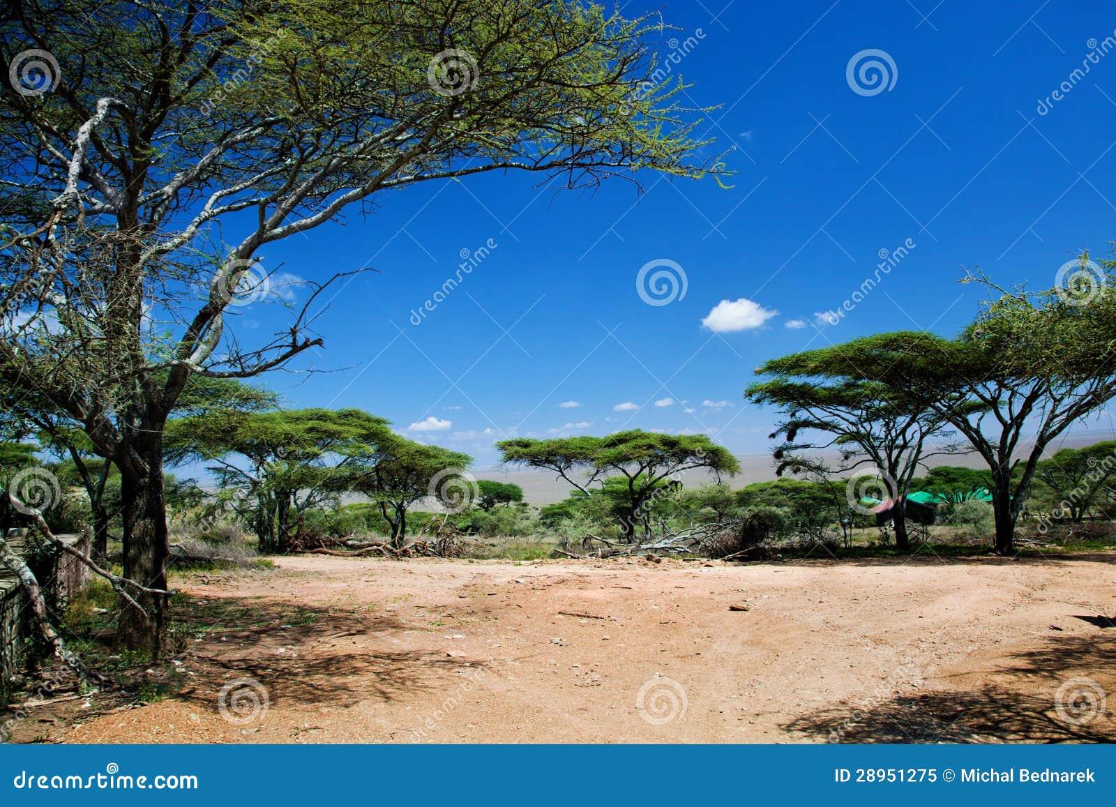 Sawanna krajobraz w Afryka, Serengeti, Tanzania