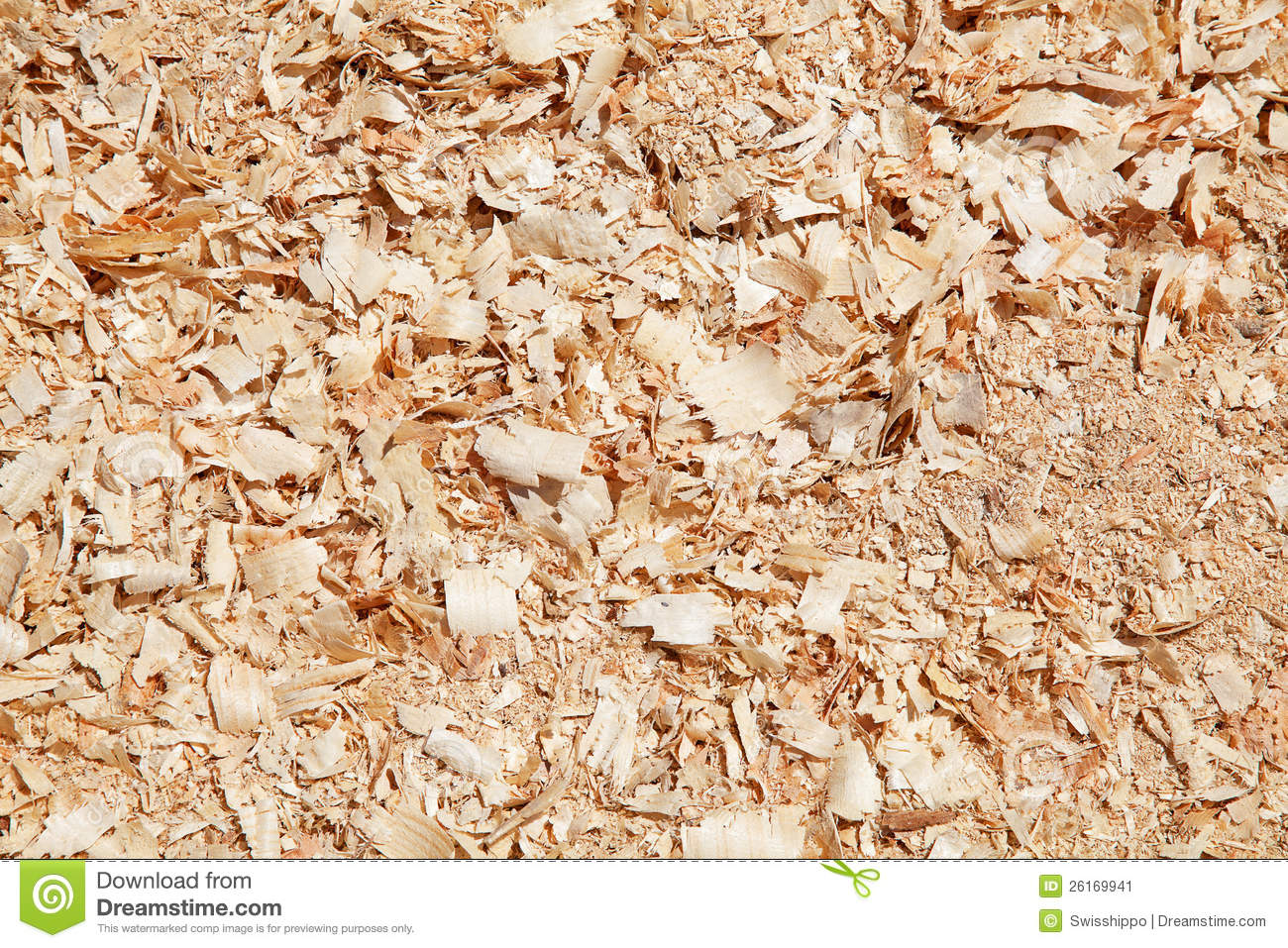 Do Termites Leave Sawdust ~ Sawdust related keywords long tail