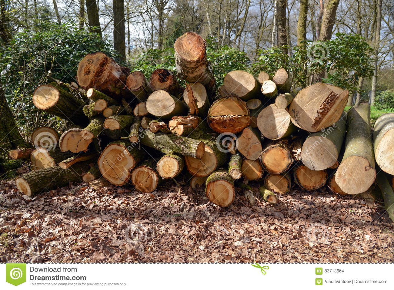 The Sawn Trees Stock Photo