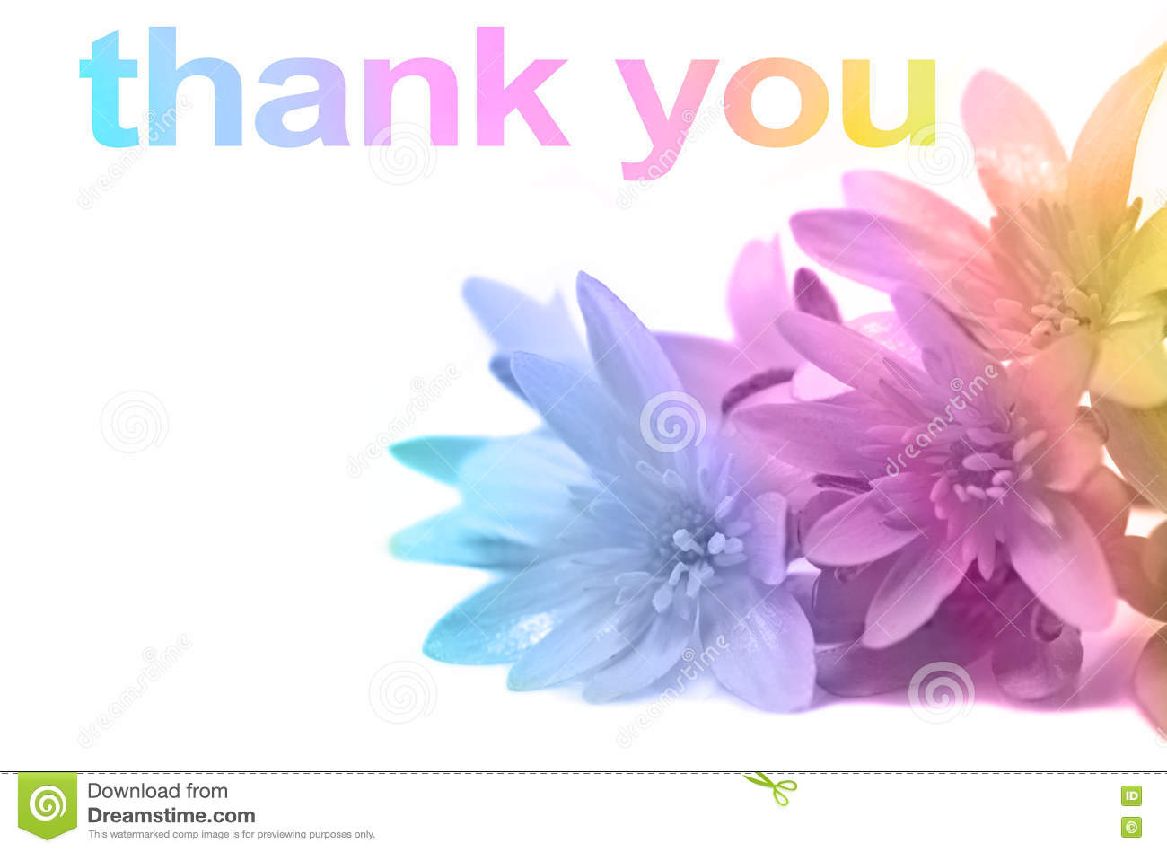 say thank you with flowers stock image image of friendship 75480513