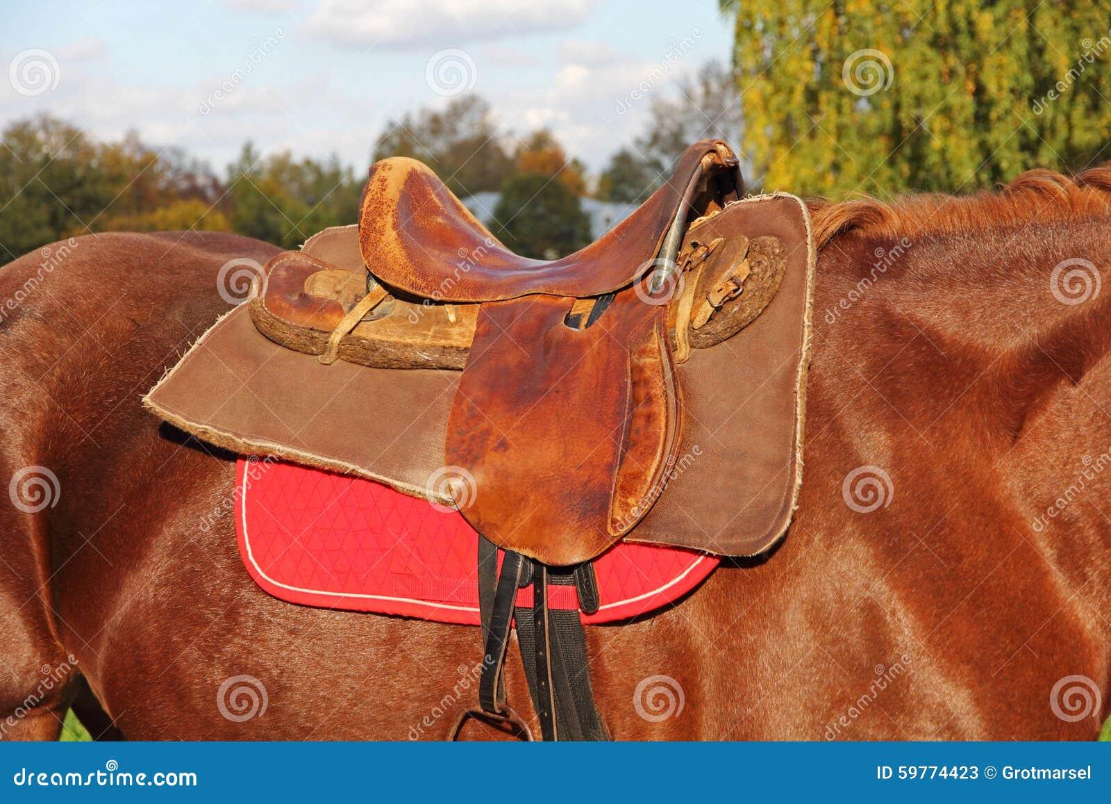 Sbarazzamento della sella su un cavallo marrone immagine stock