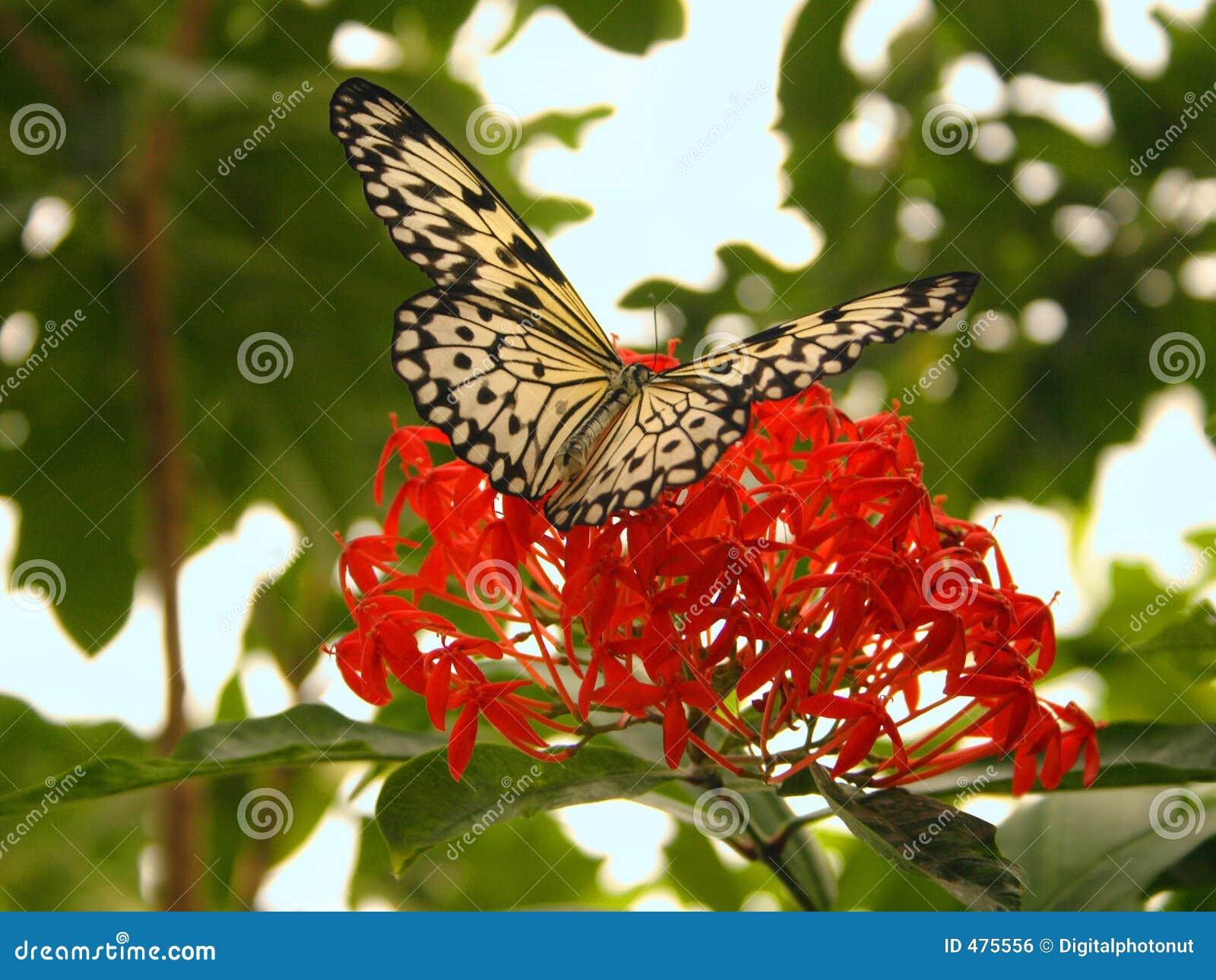 Sbarchi della farfalla sul fiore