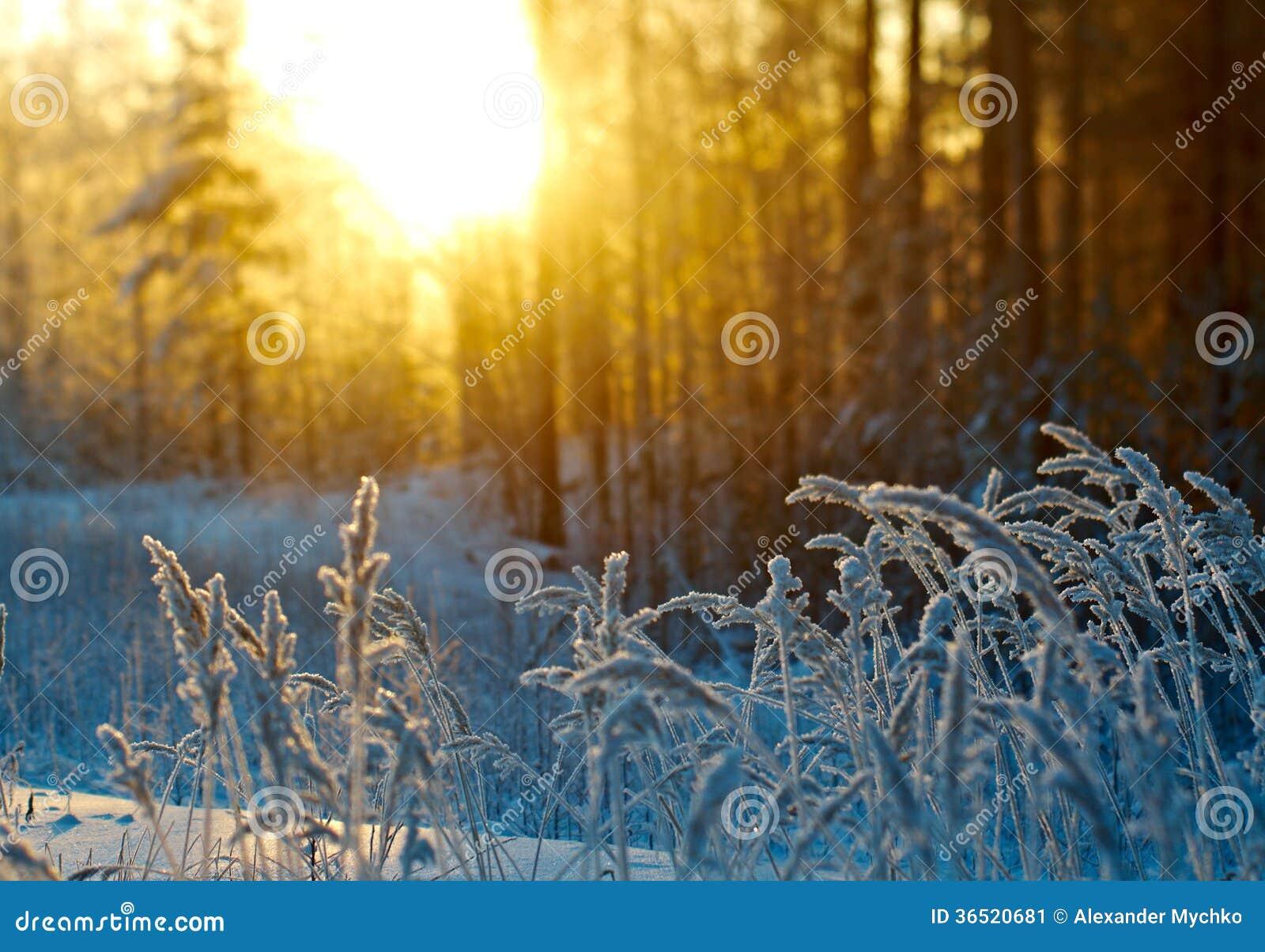 Scène d hiver