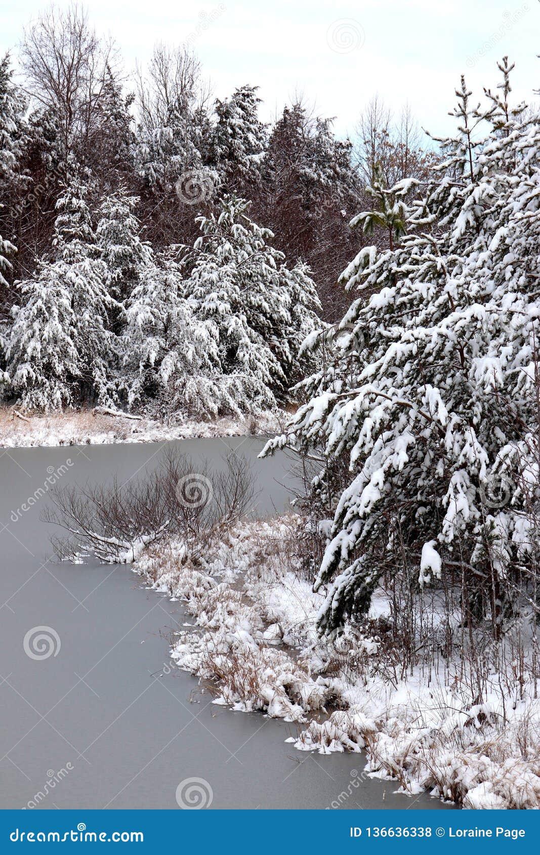 Scène d hiver des arbres givrés et de l eau congelée de réservoir