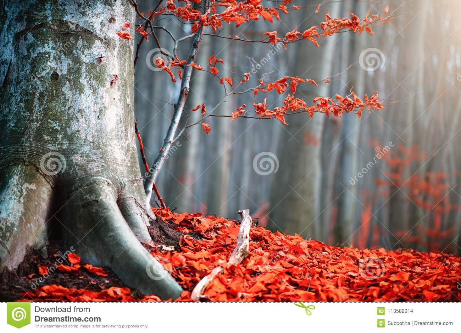 Scène de nature d automne Paysage de chute d imagination Beau parc automnal avec des feuilles de rouge et de vieux arbres