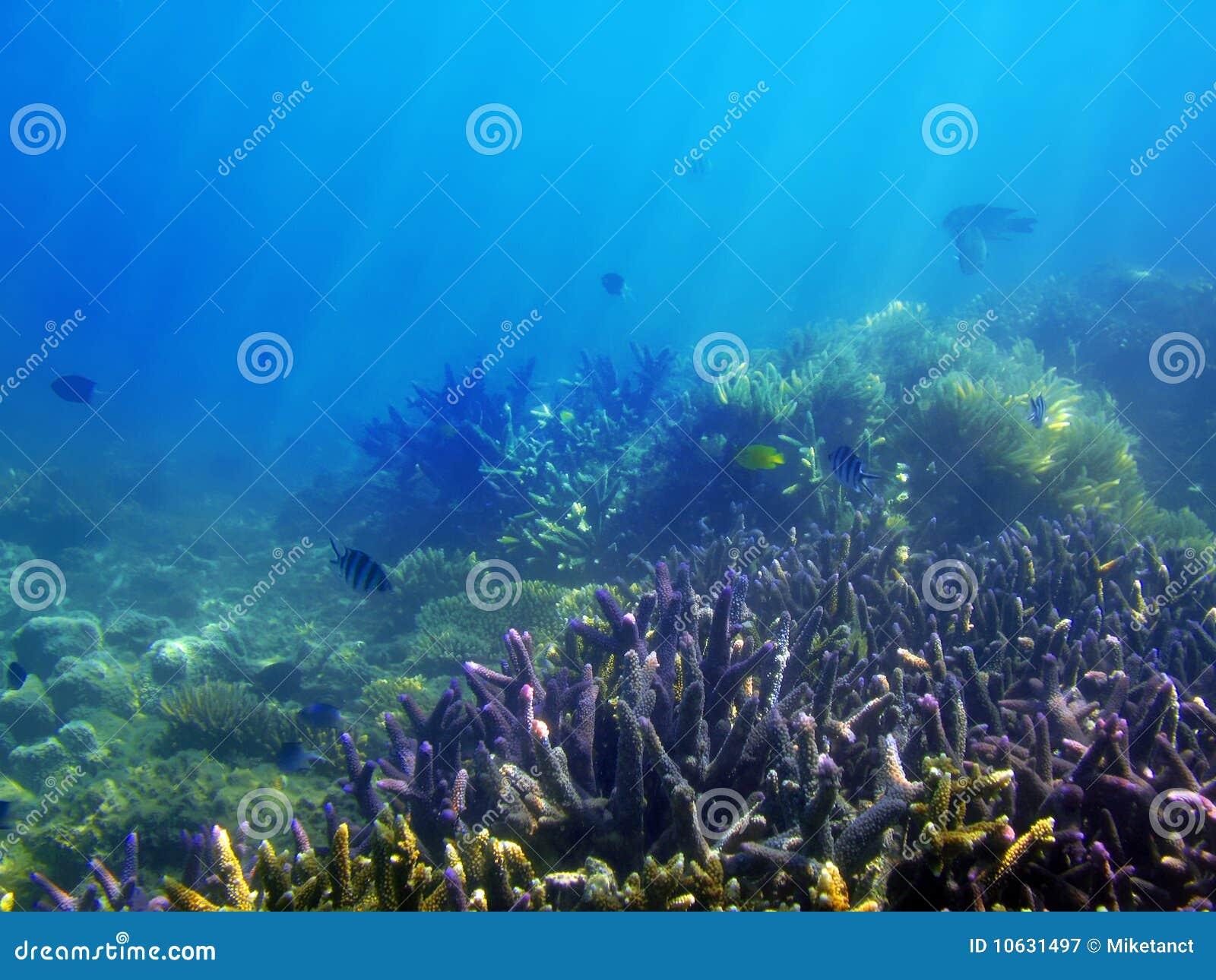 Scène sous-marine de récif