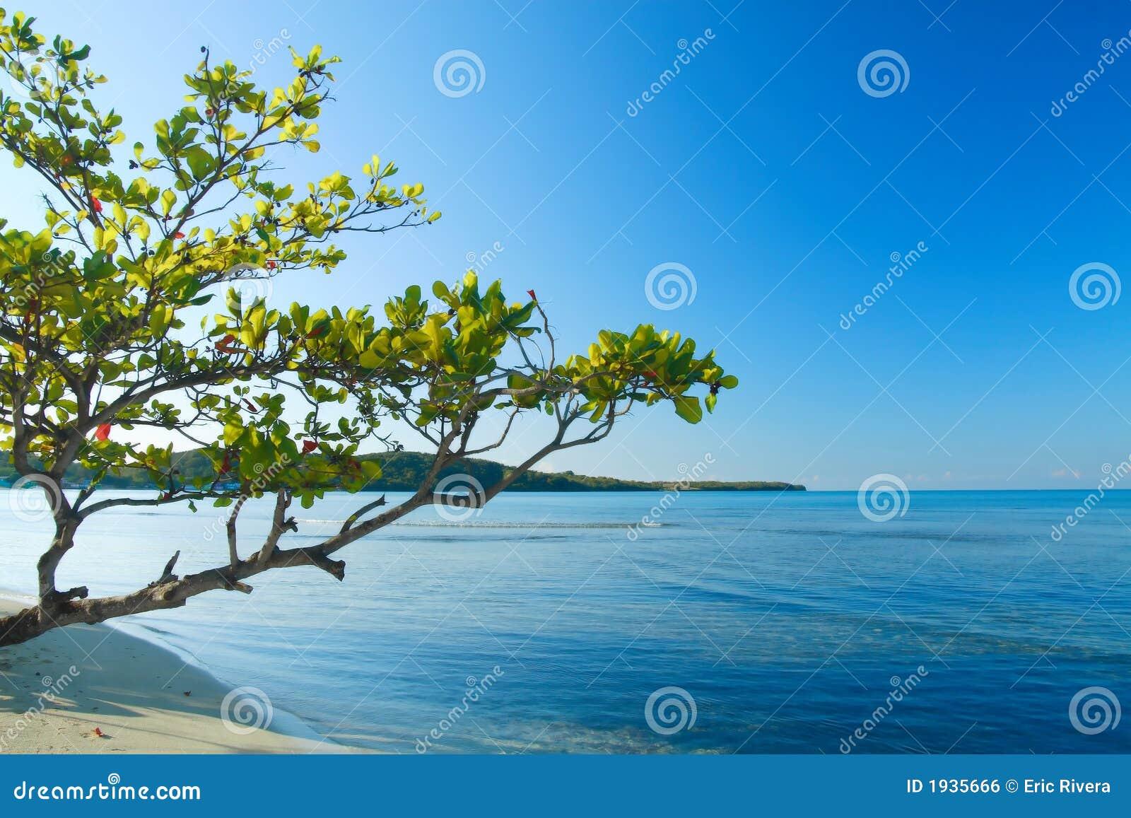 Scène tropicale de plage de Buye à l île des Caraïbes du Porto Rico